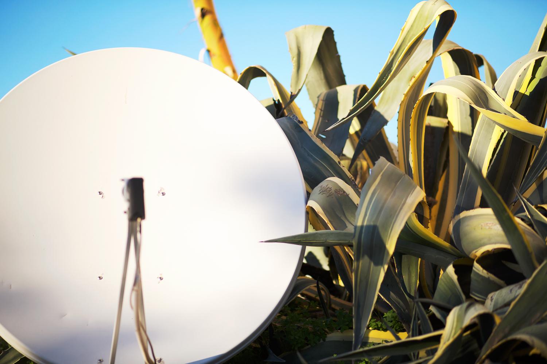 cactus satellite.JPG