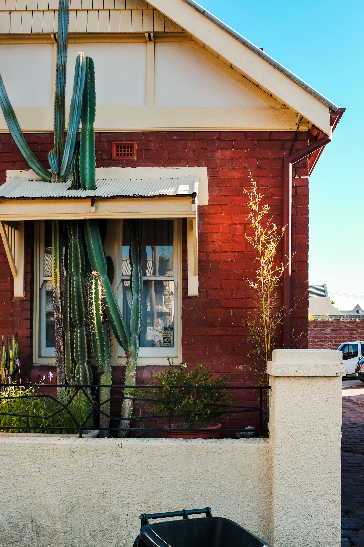 cactusthroughroof.jpg