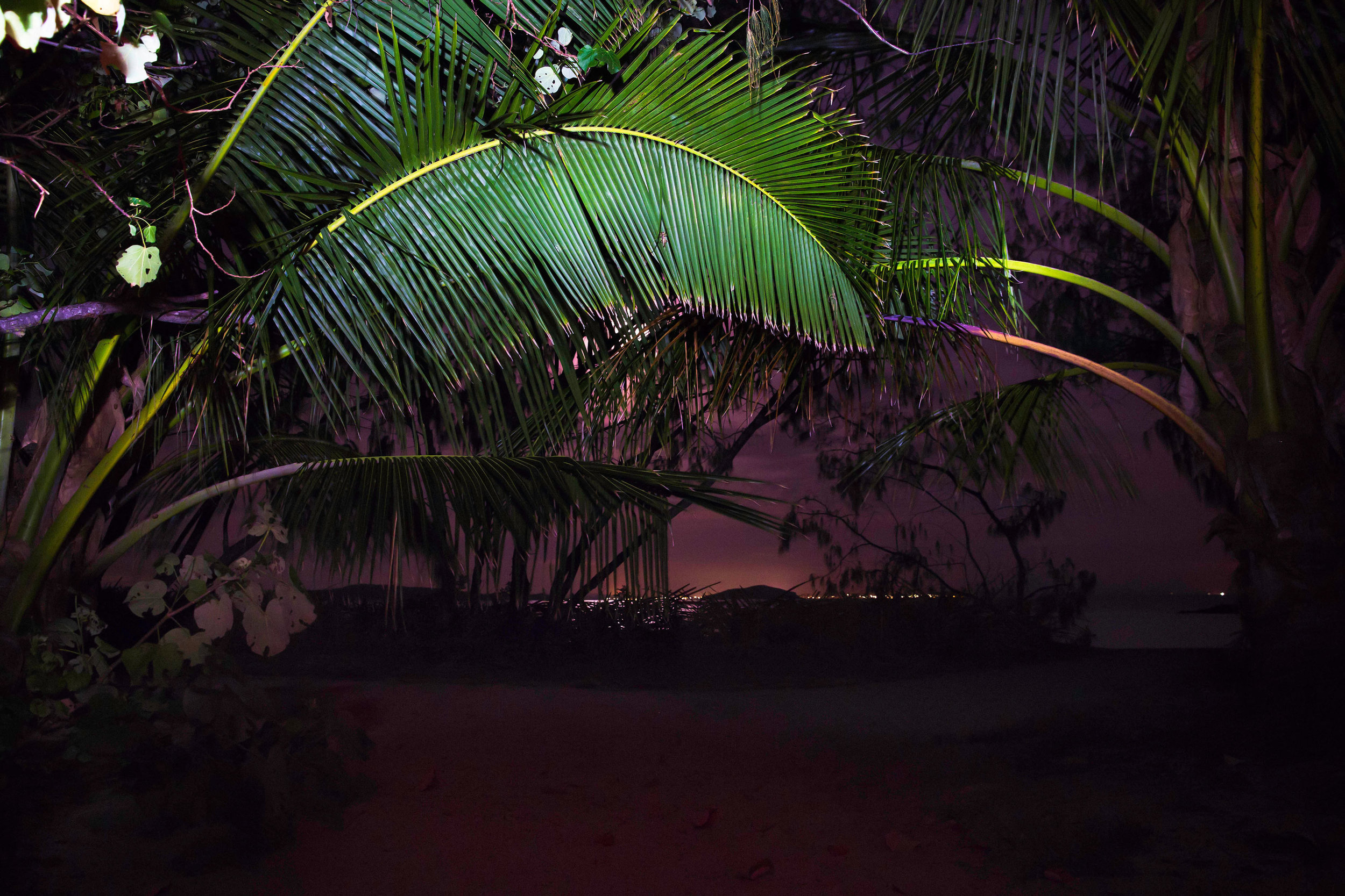 gki-palm-trees-night-2.jpg