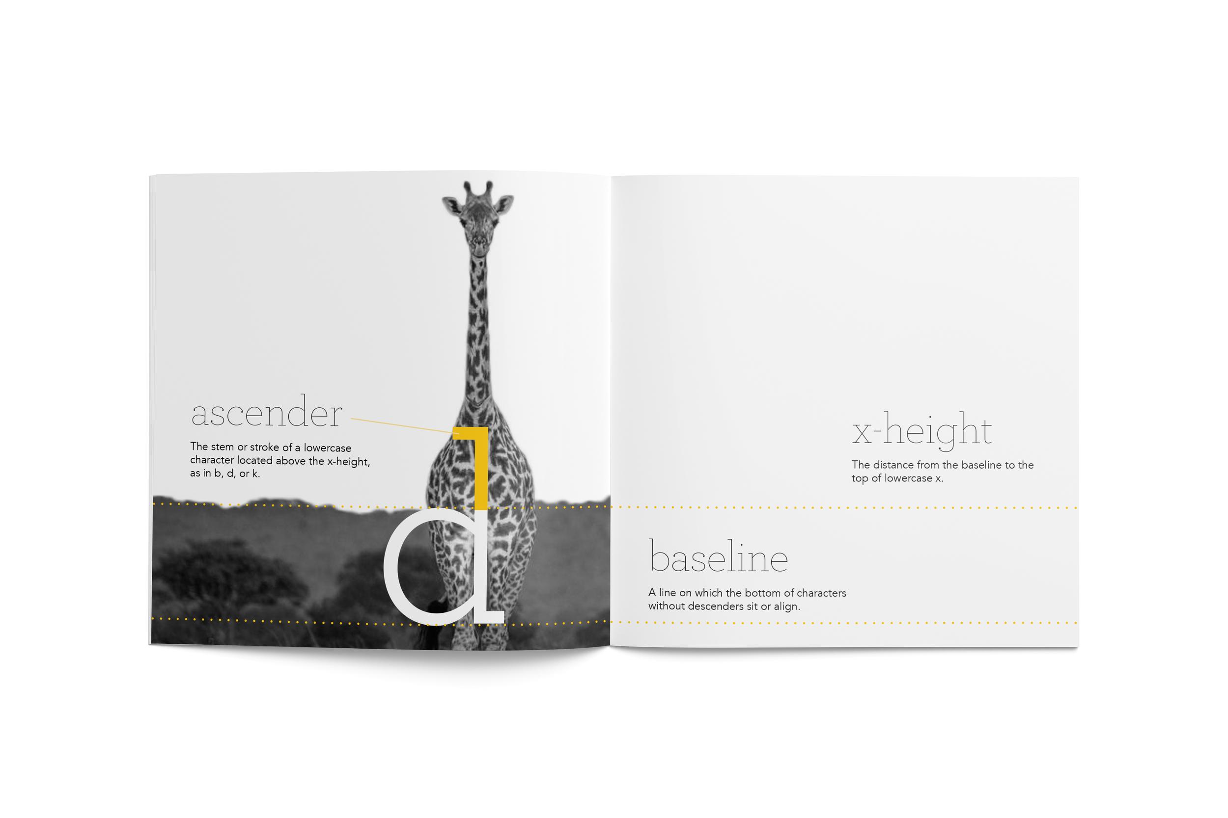 giraffe_Inside.jpg