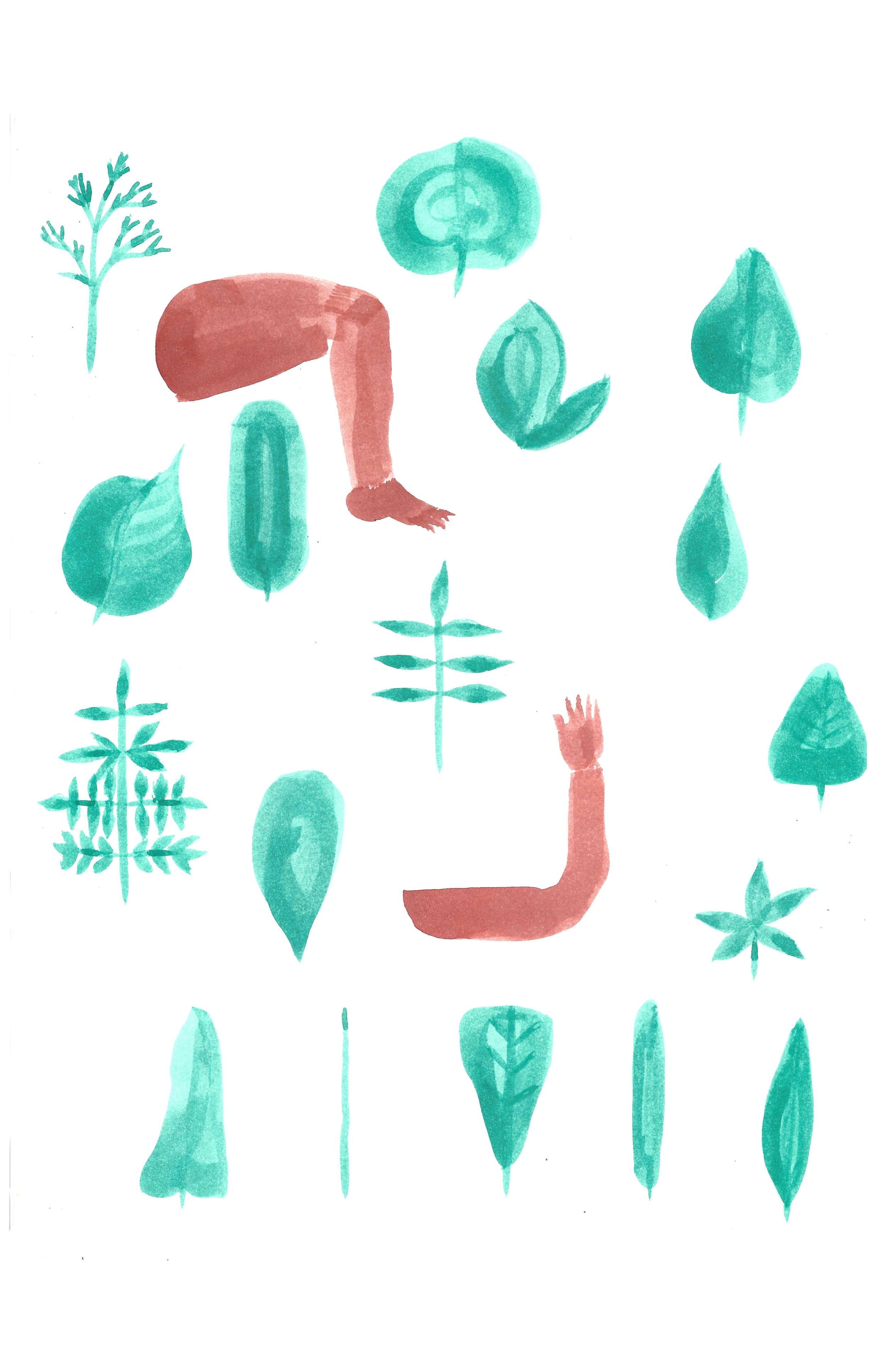 Leaf Shapes and Limbs
