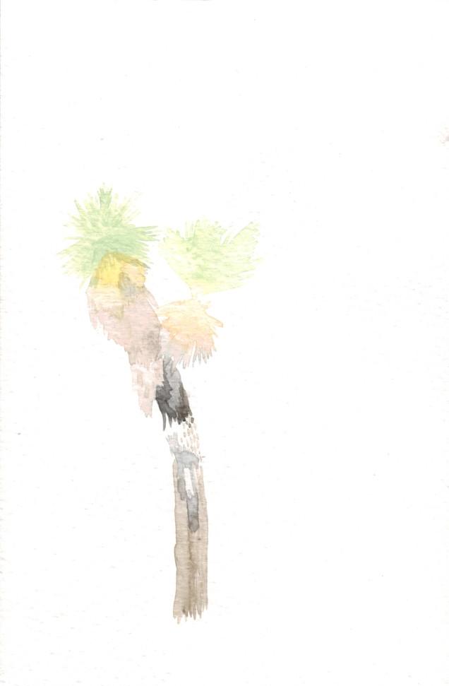 Road Study II: Joshua Tree, CA
