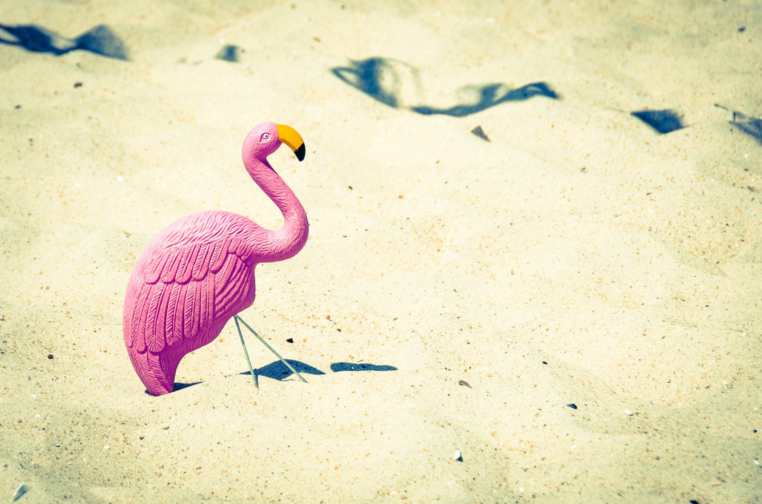 flamingo-StockSnap_3FG2PAQ7OM.jpg