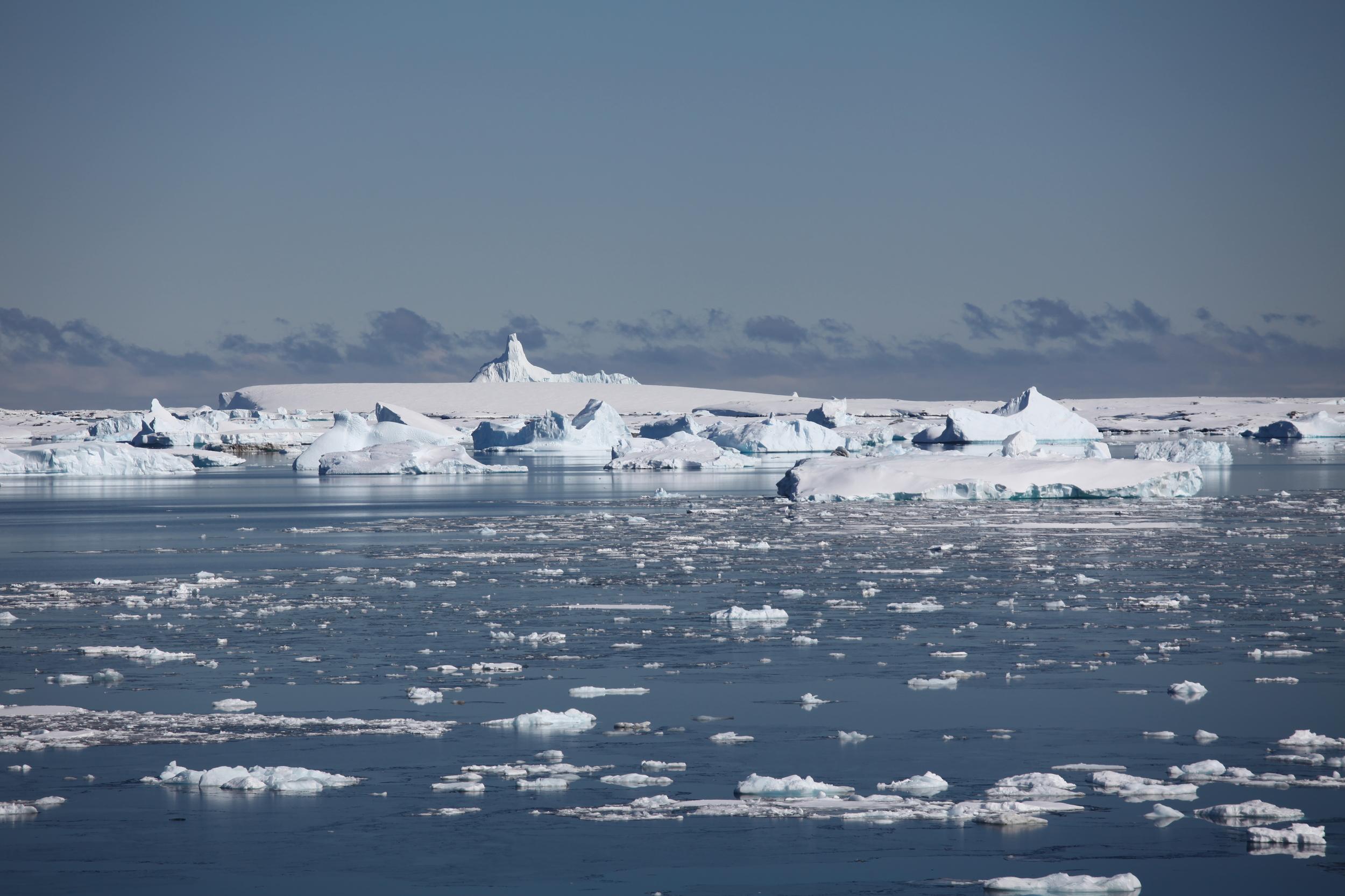 icebergfields.jpg