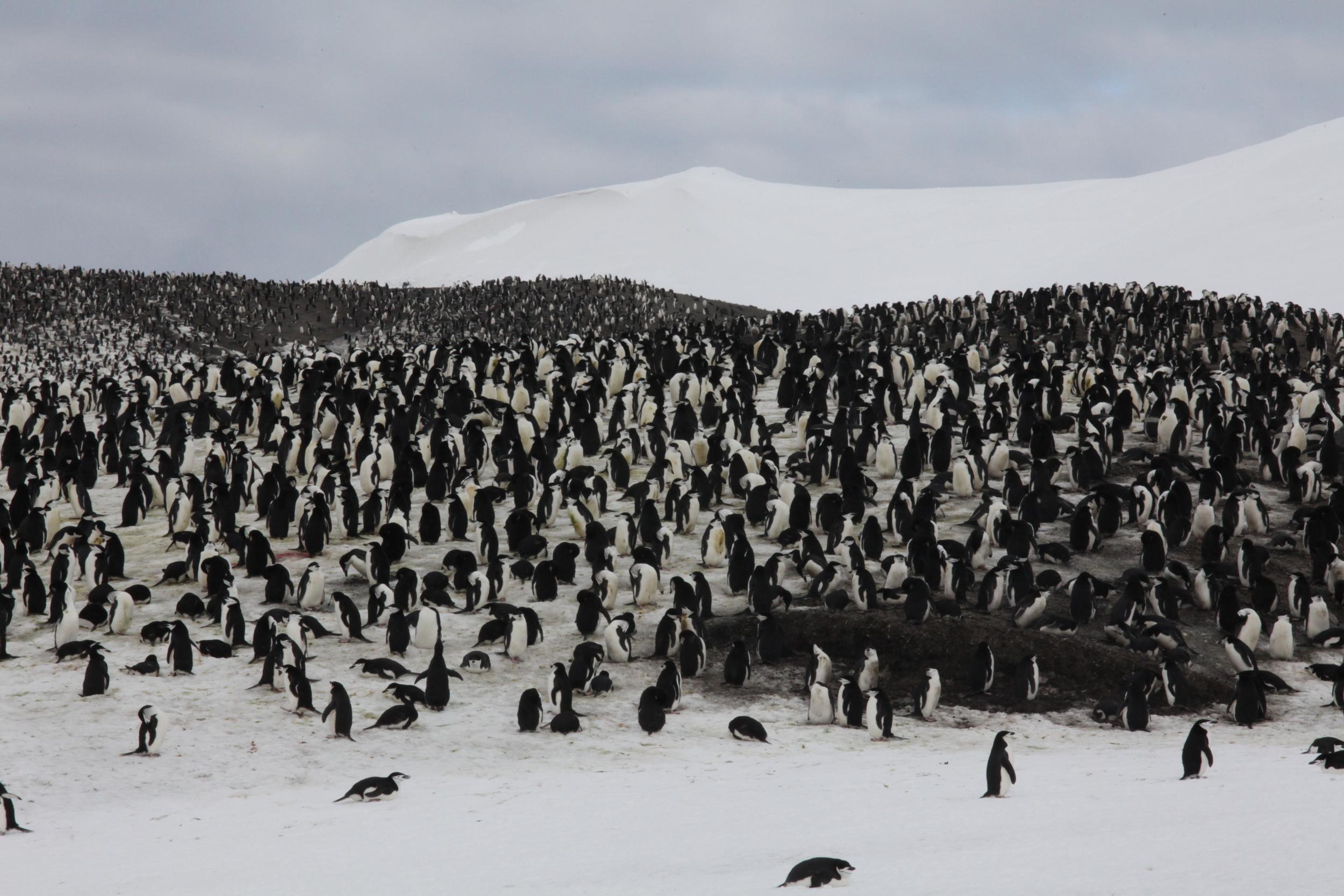 penguinmass1.jpg