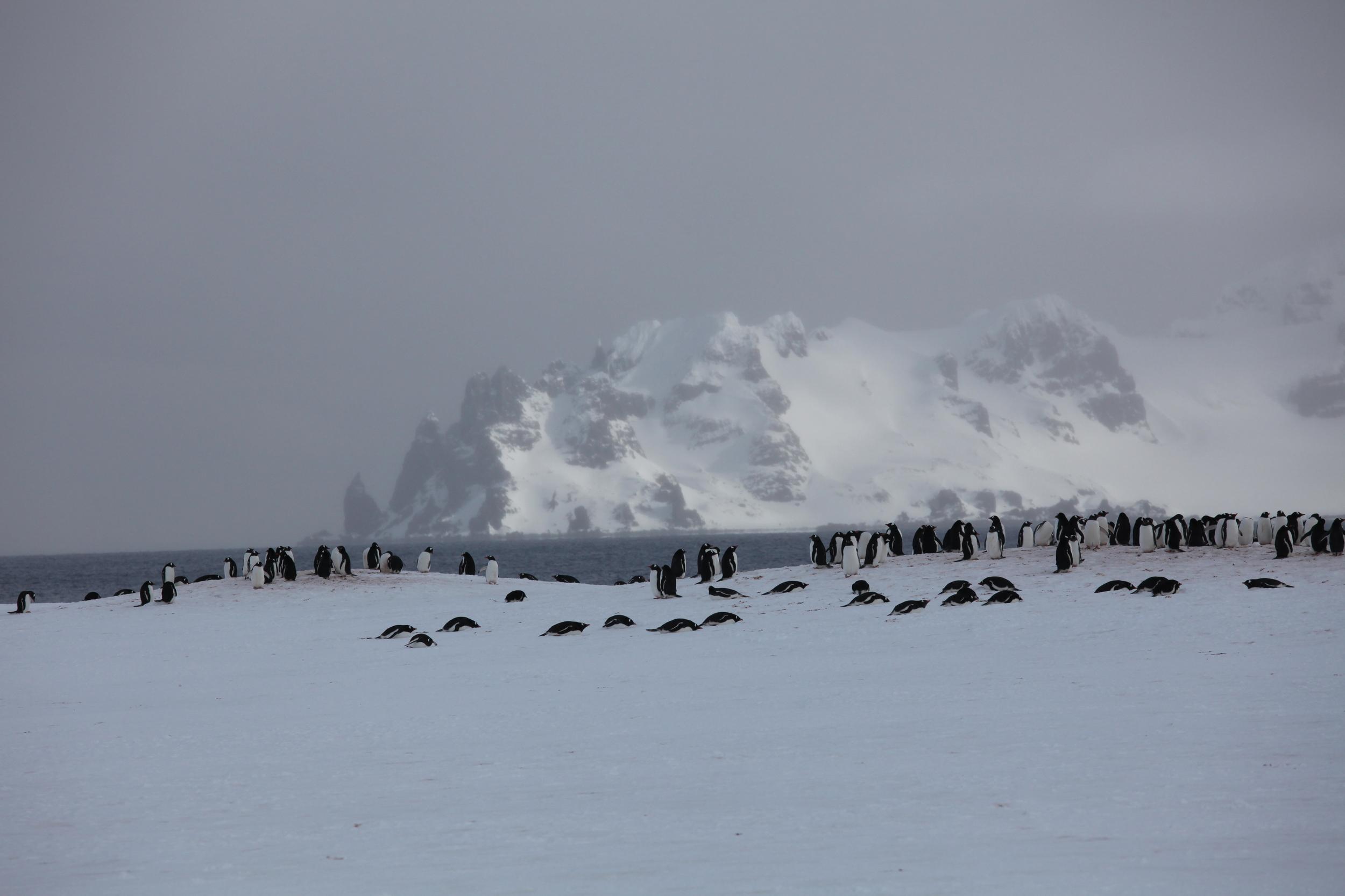 penguinmass3.jpg