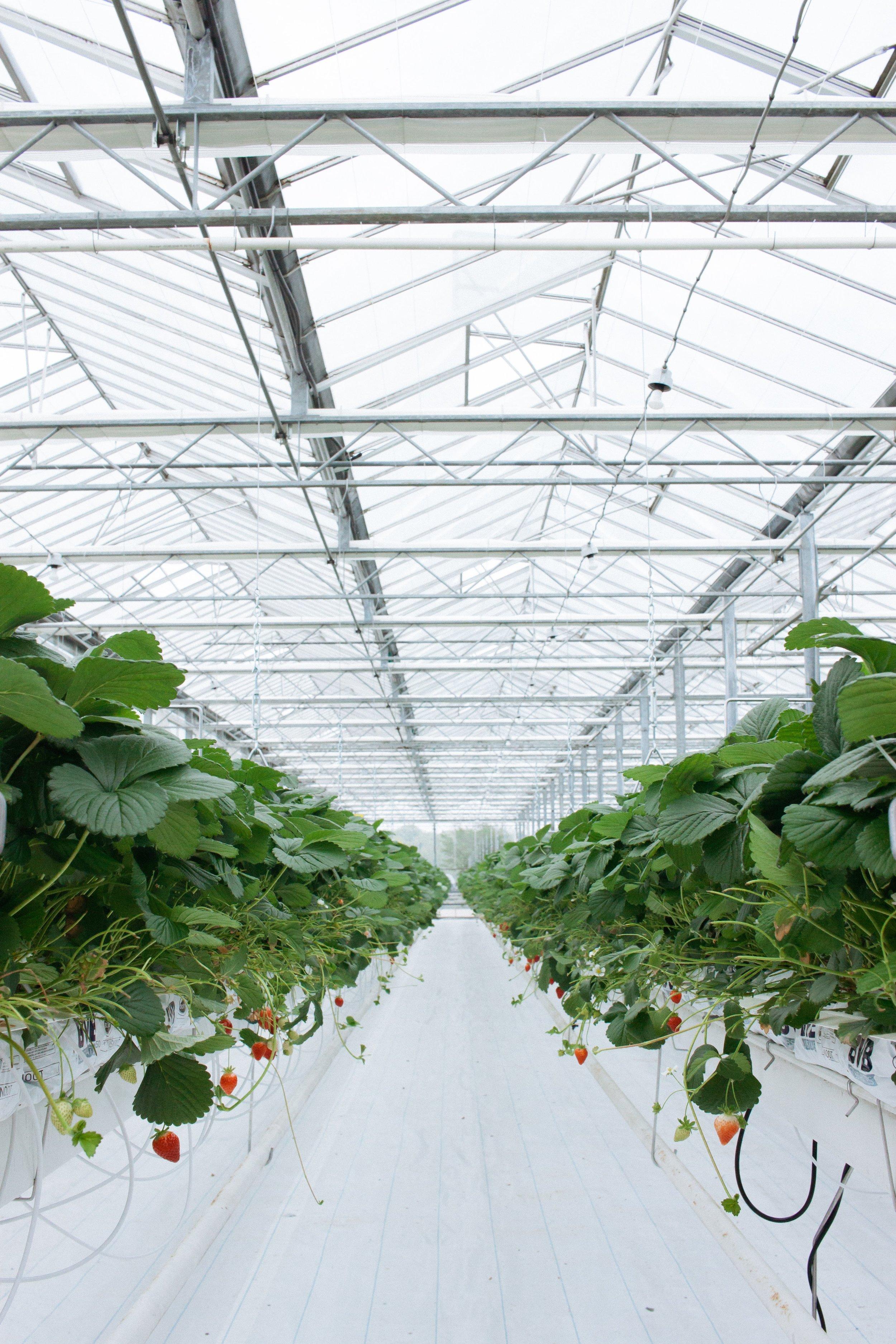 Dutch Garden-20.jpg