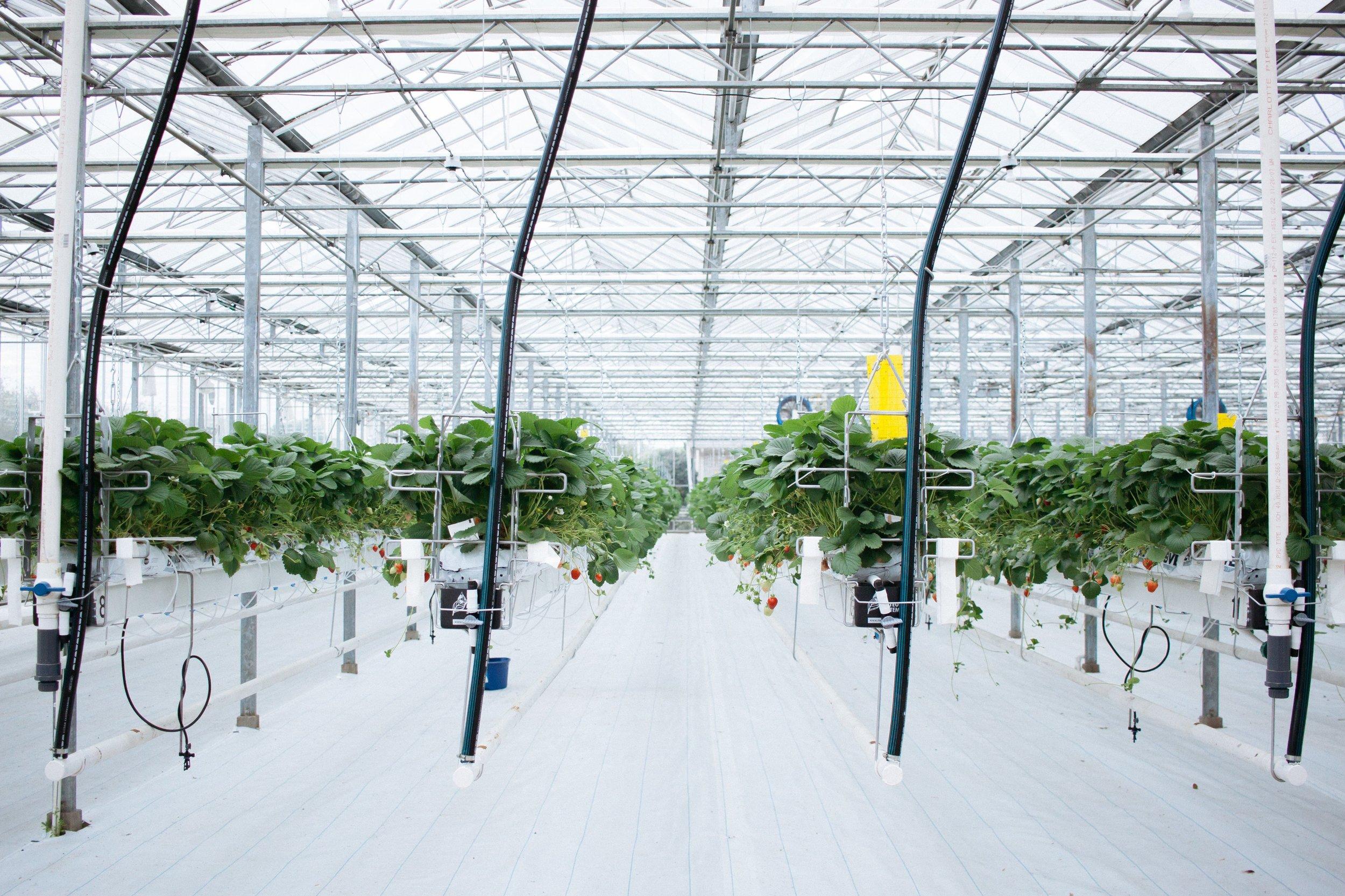 Dutch Garden-16.jpg