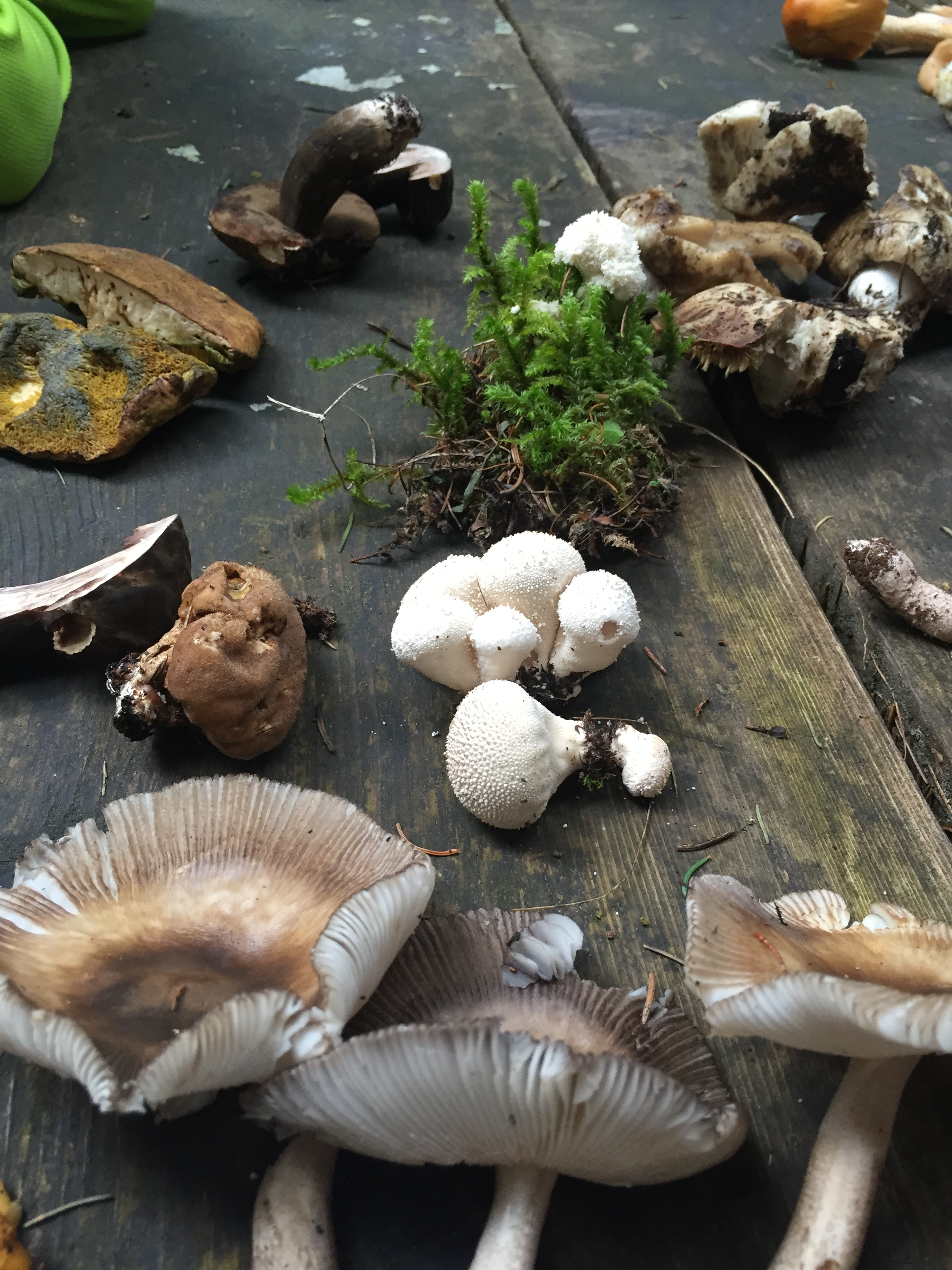 The bounty of their labor - these are some expert mycologists!