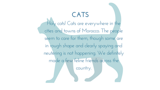 Morocco Special Graphic 1.png