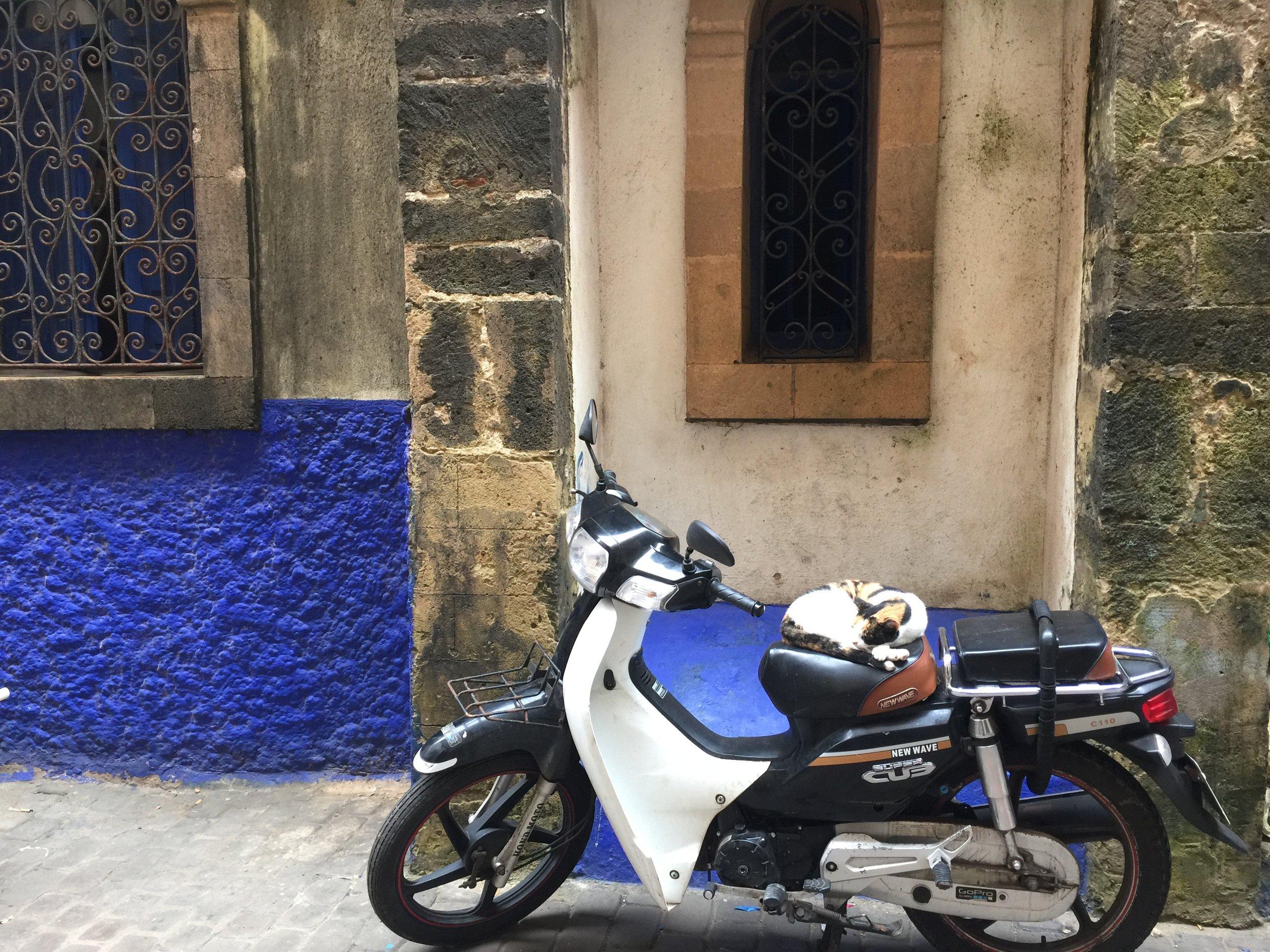 Cat nap on a moto. Streets of Essaouira, Morocco