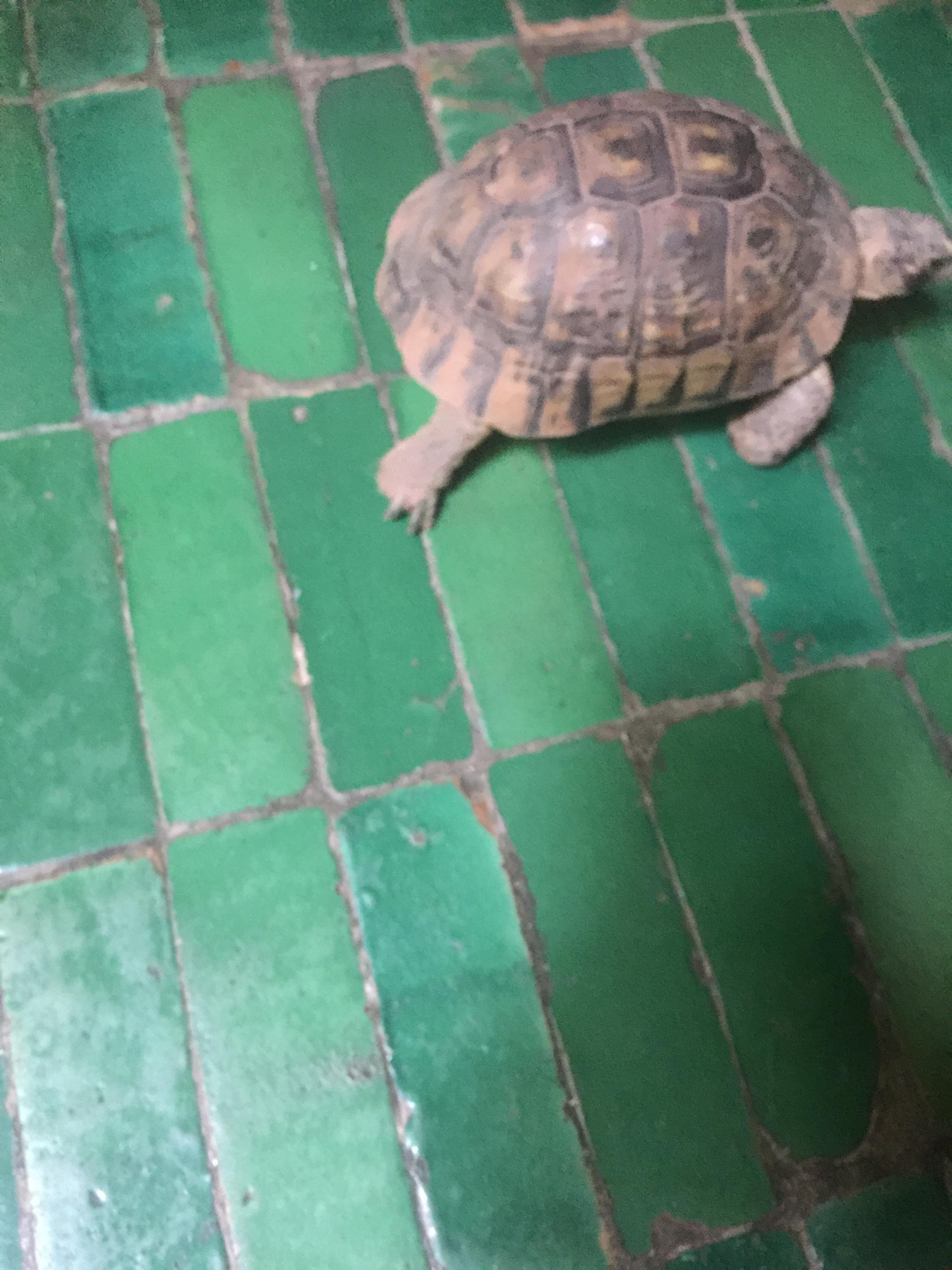 Tortoise lunch companion