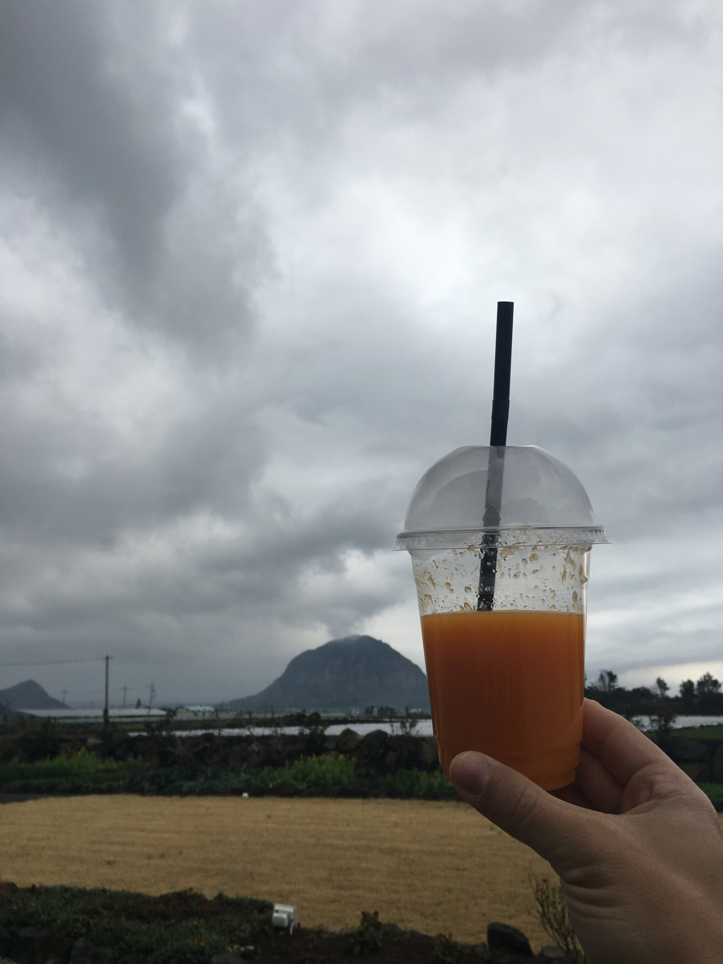 Freshly Squeezed Jeju Mandarins!