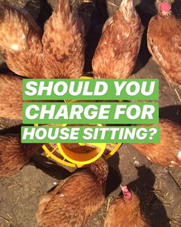 Should You Charge For House Sitting