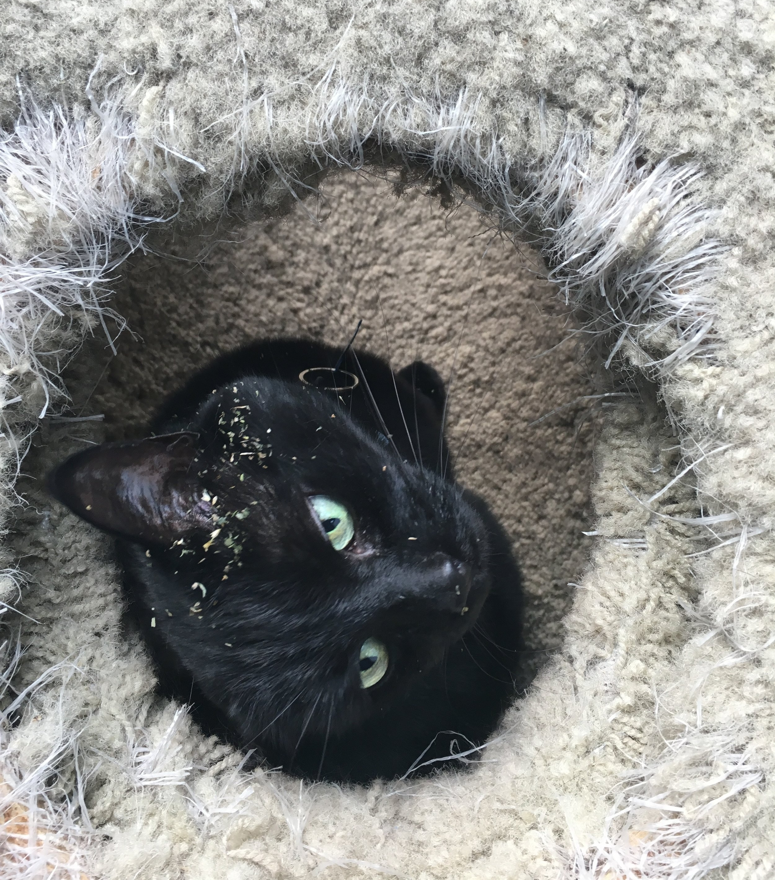 Black Cat in A Hole