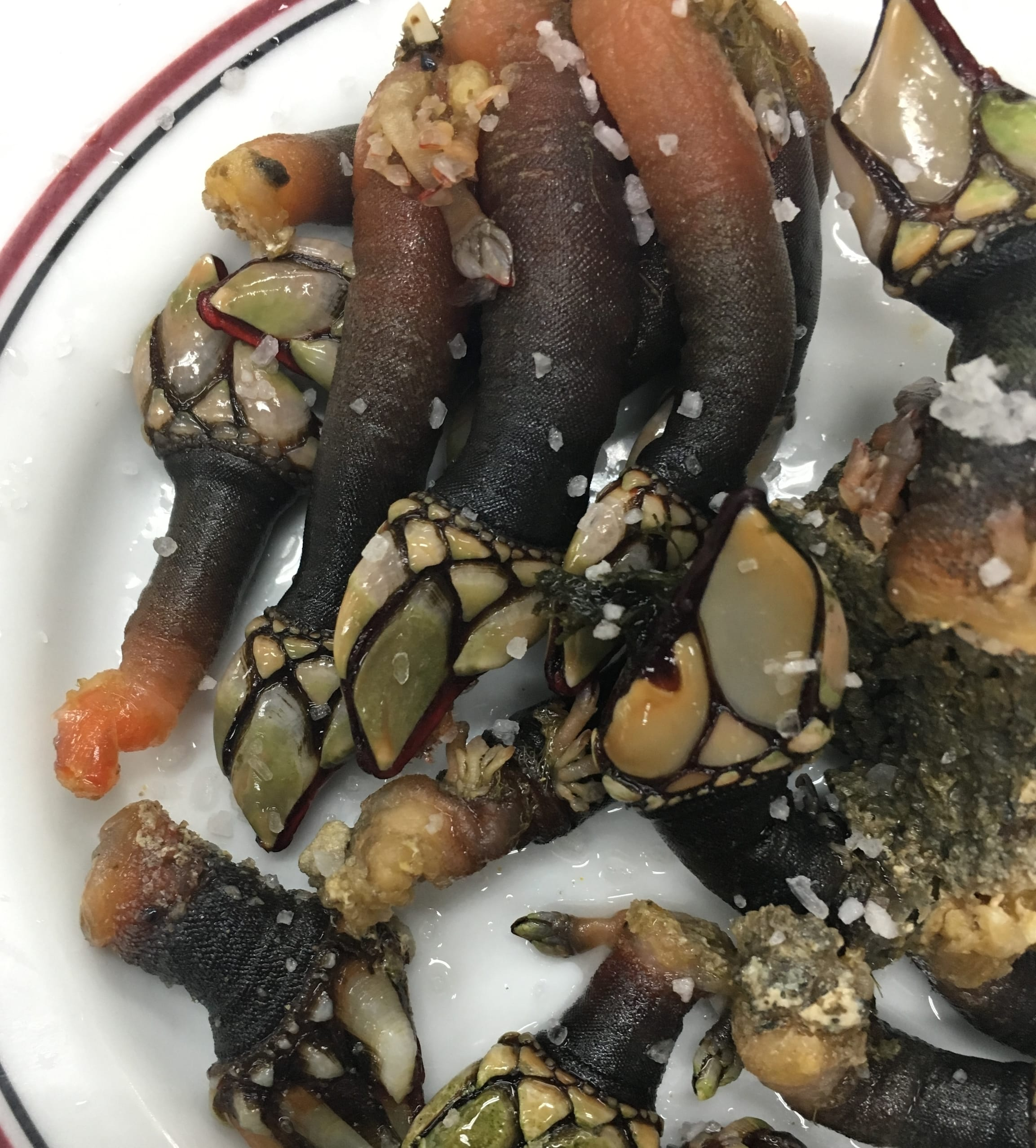 Song of the Sea Food Tour: Barnacles