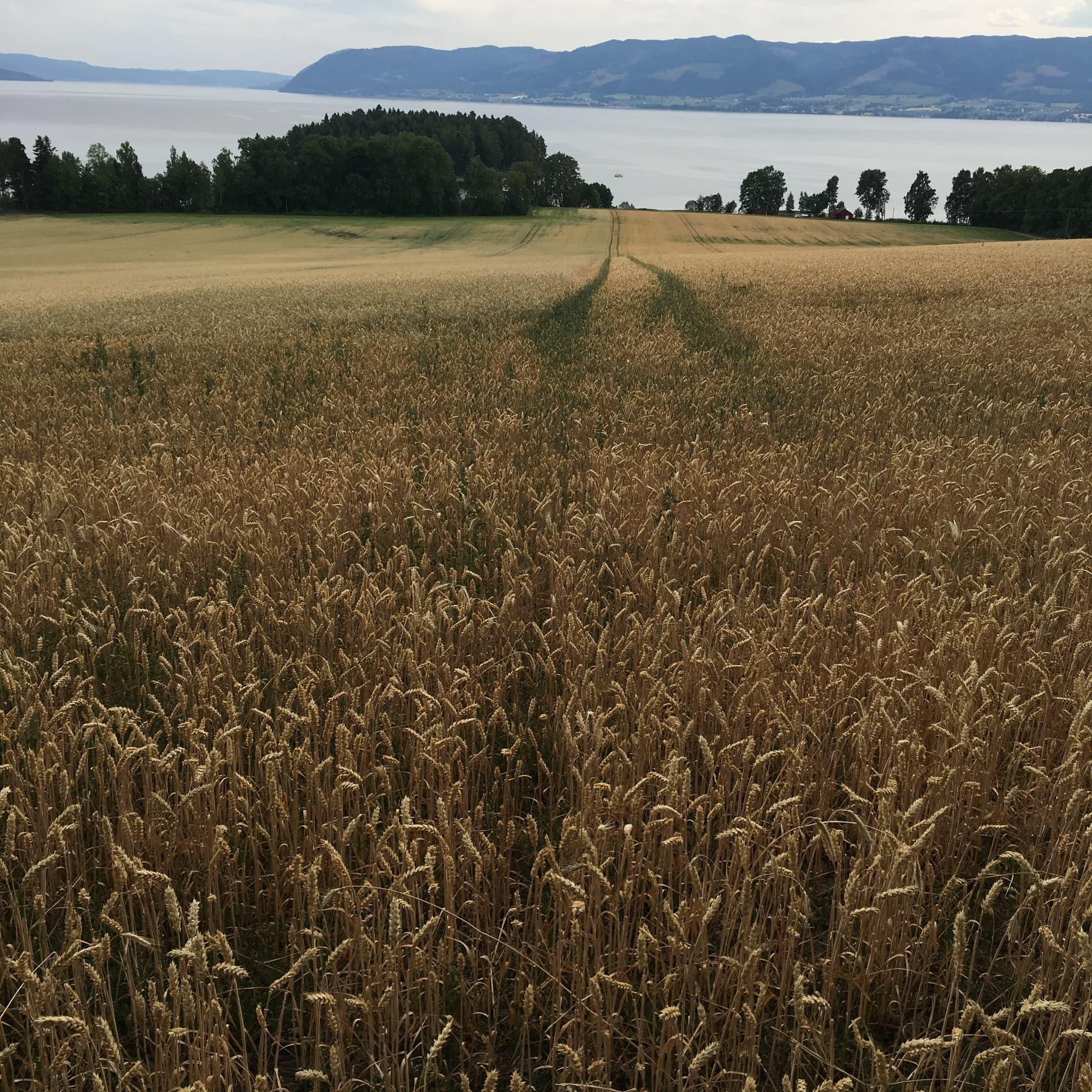 A Dry Norwegian Field