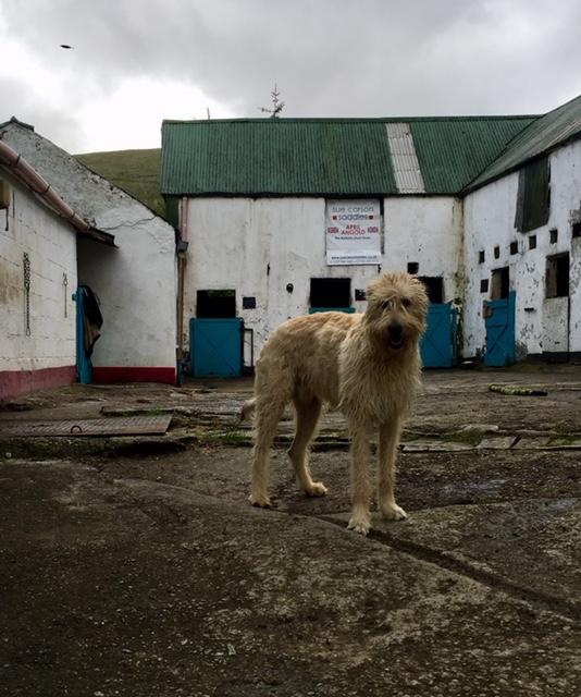 Irish Wolfhound named Ghost.