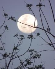 1345824_trees_and_moon_1.jpg