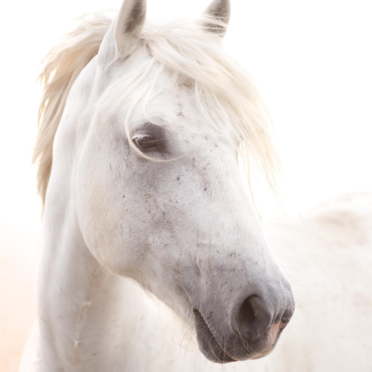 Equine 2031