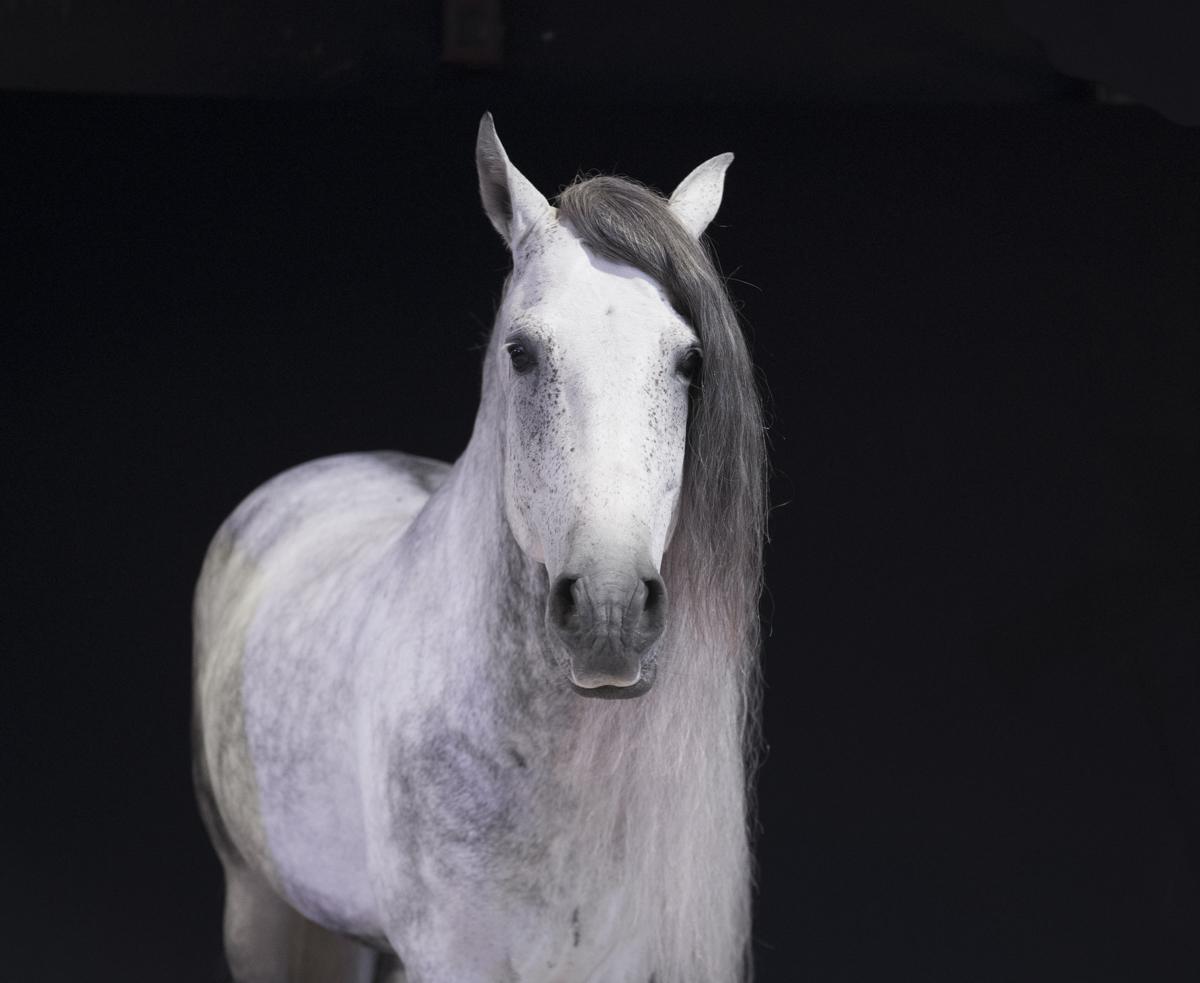 Equine 1250