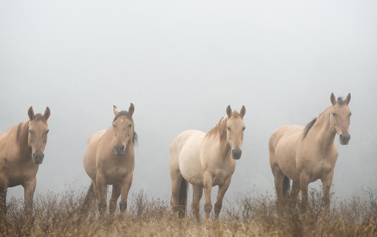 Equine 5789