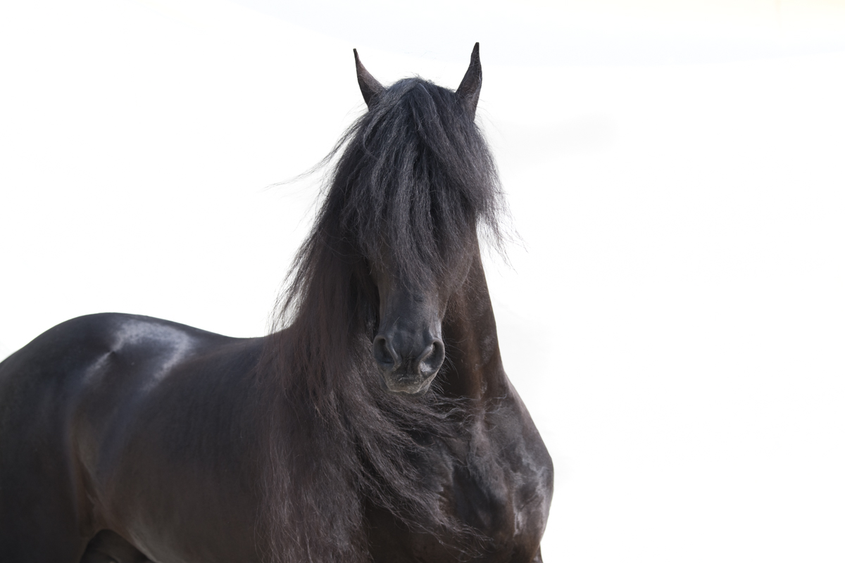 Equine 760