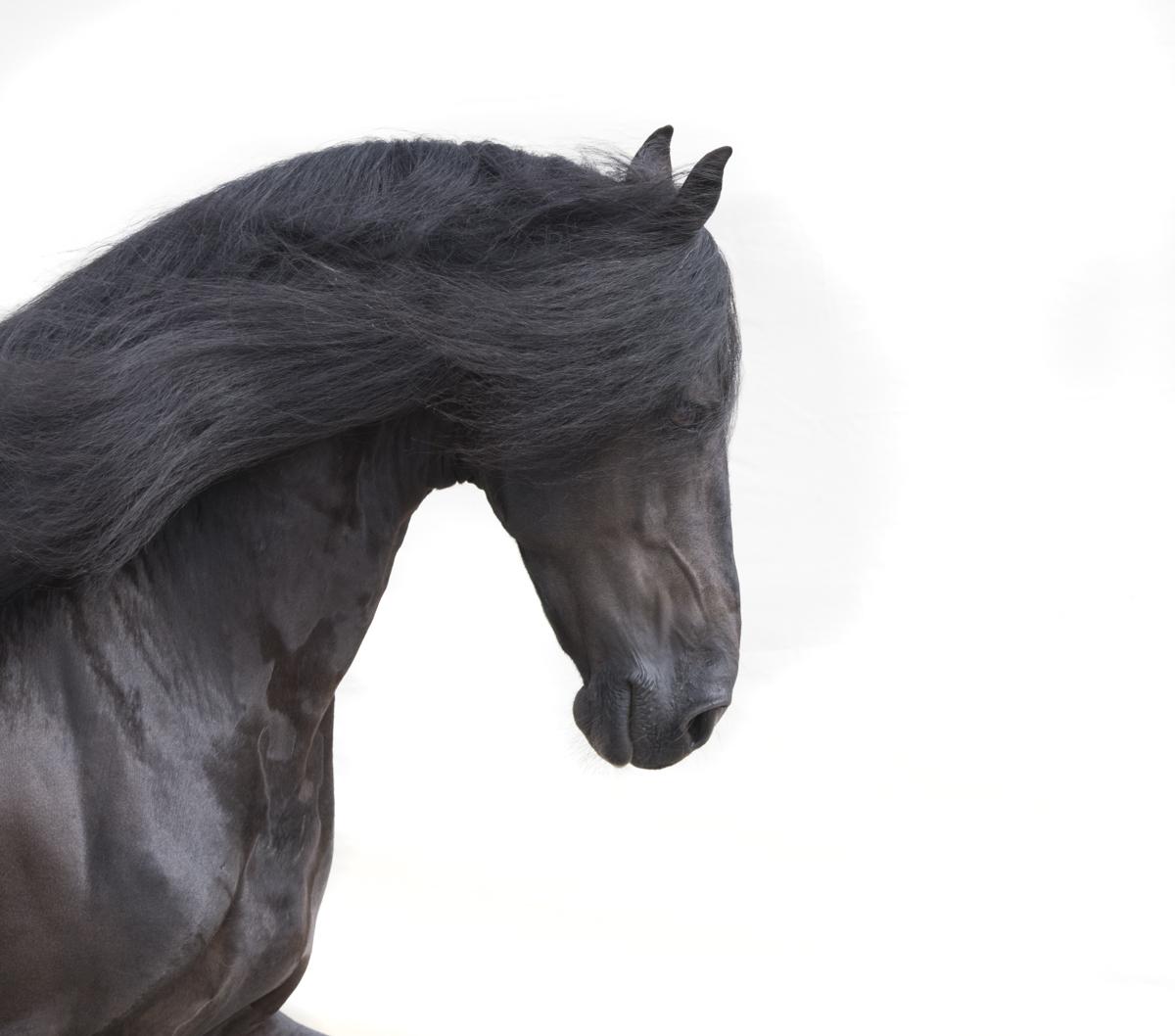Equine 595