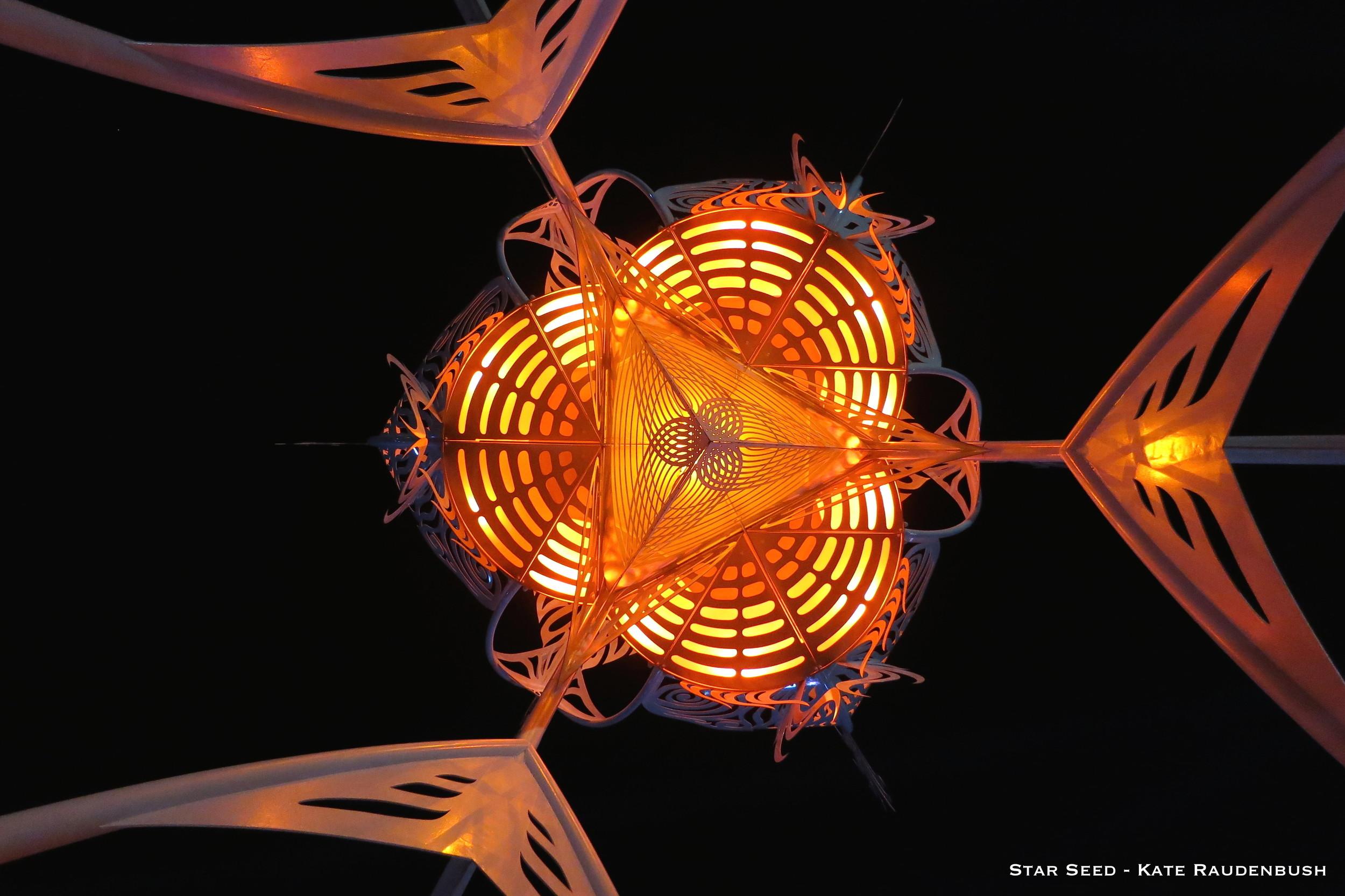 Star Seed-detail-KRaudenbush.jpg