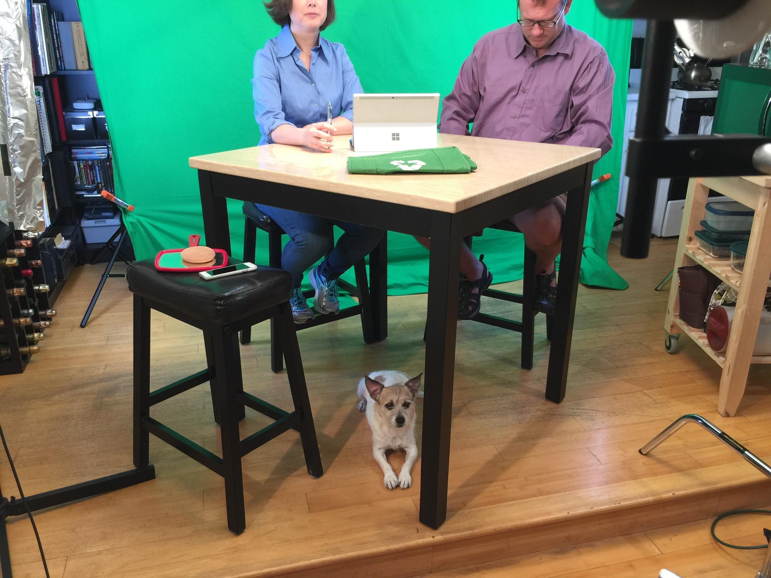 Fargo, Heather's pup, hard at work