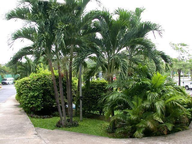 Andonia Palm 2.jpg