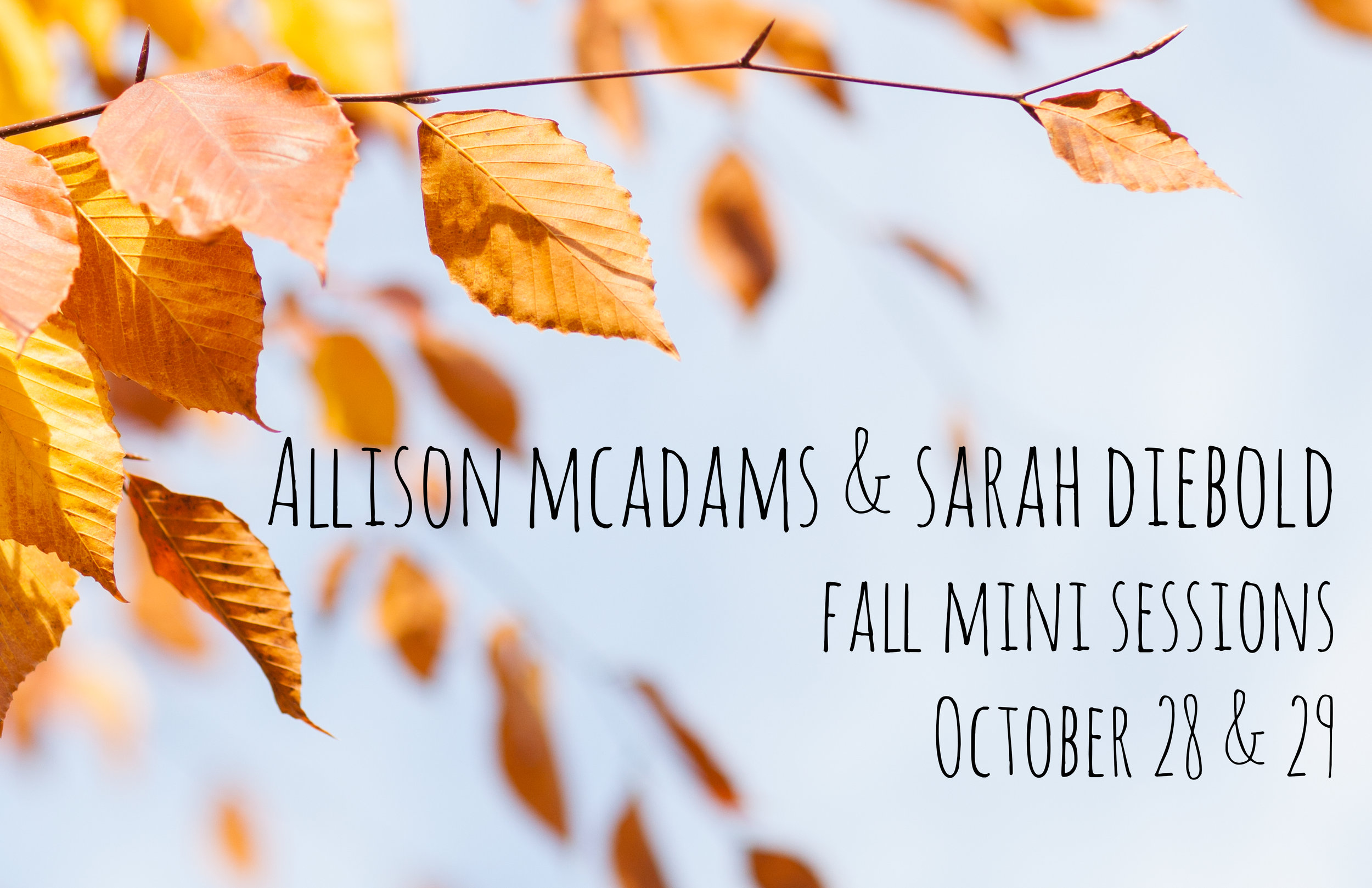 cincinnati fall mini sessions