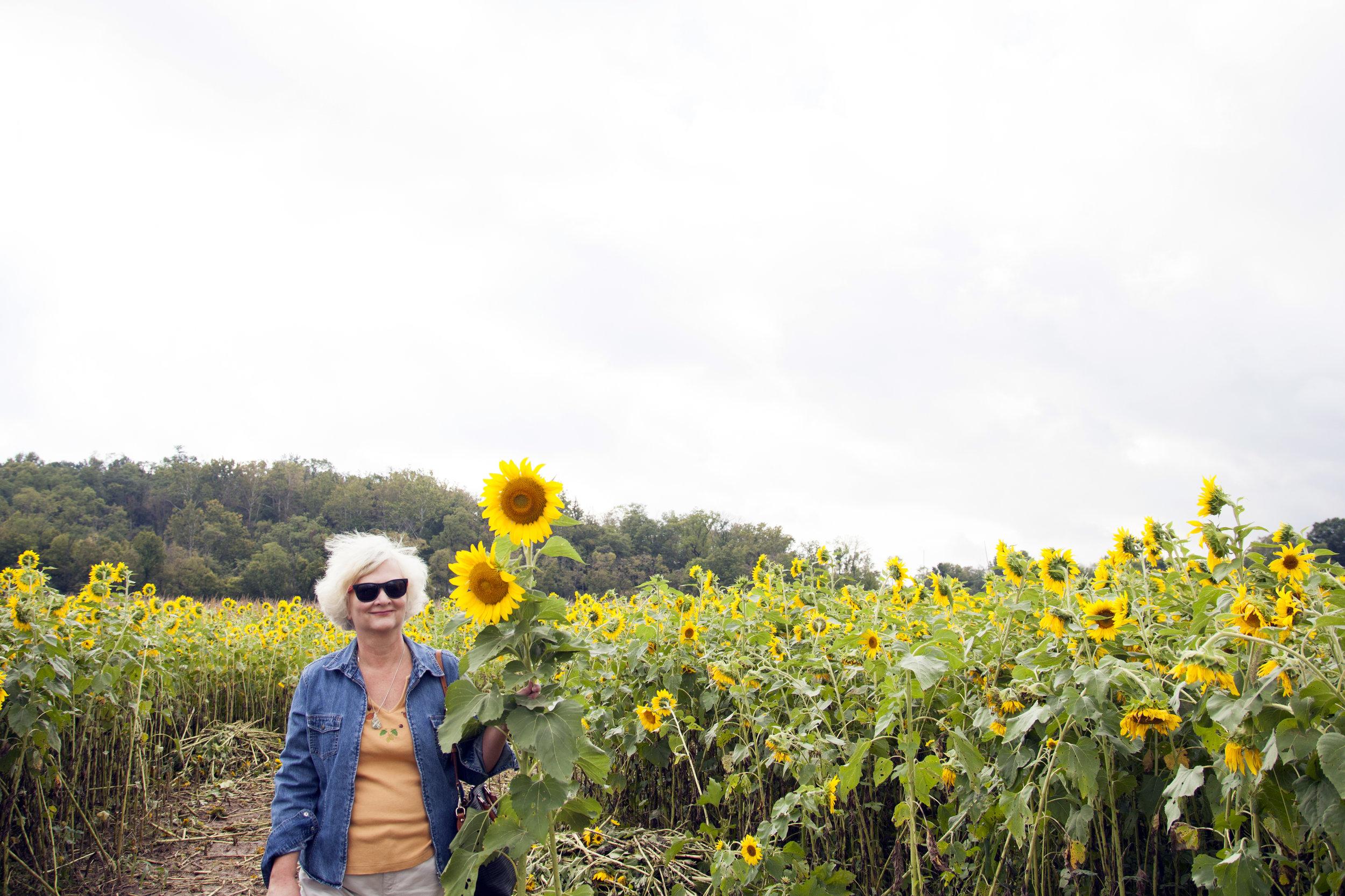 sunflower7.jpg