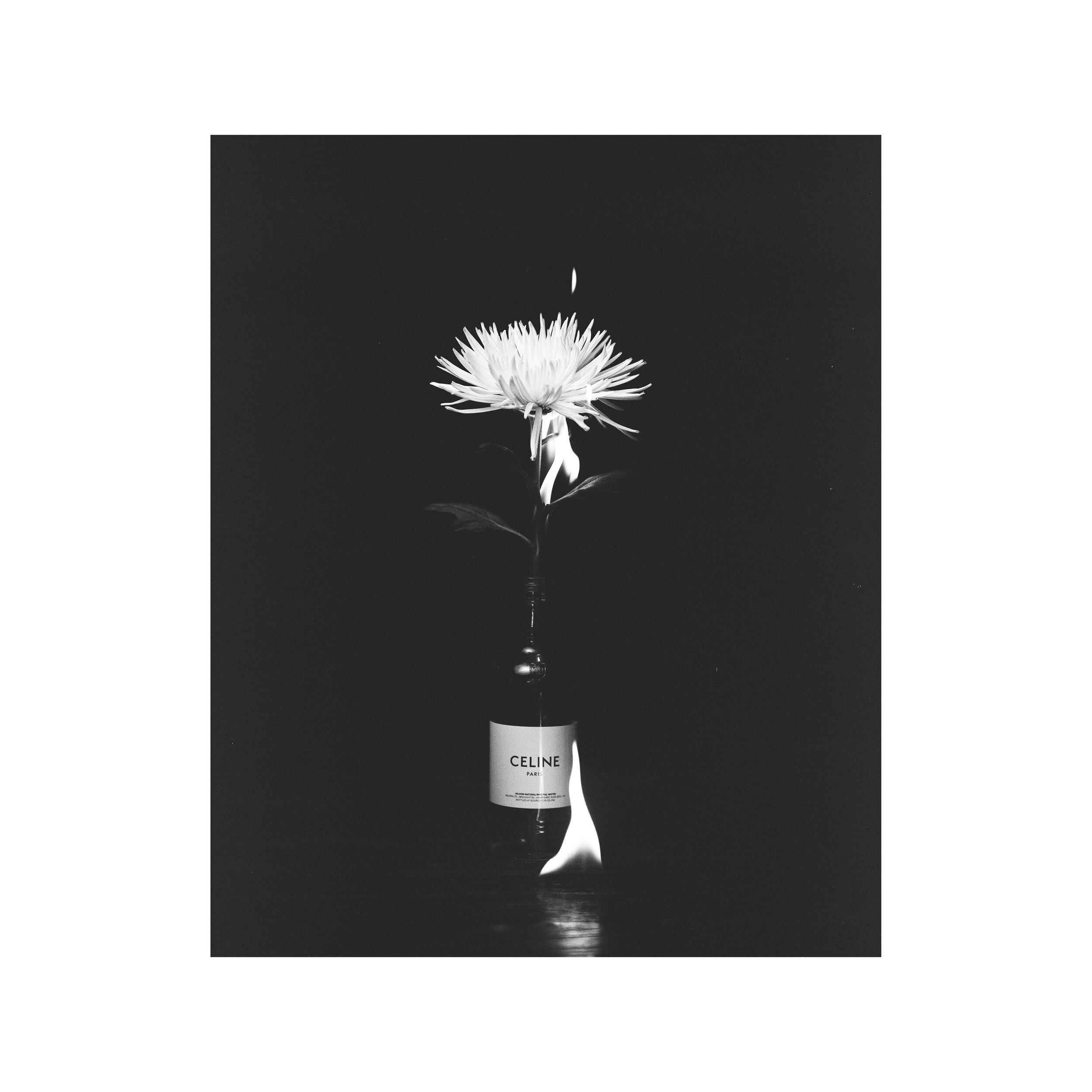 Celine Flower.jpg