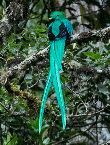 Resplendent Quetzal - Dixie Sommers