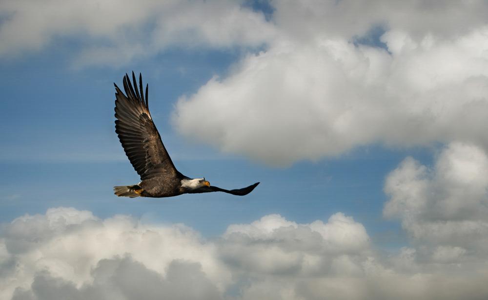 Bald Eagle, Antonio Busiello/Audubon Photography Awards