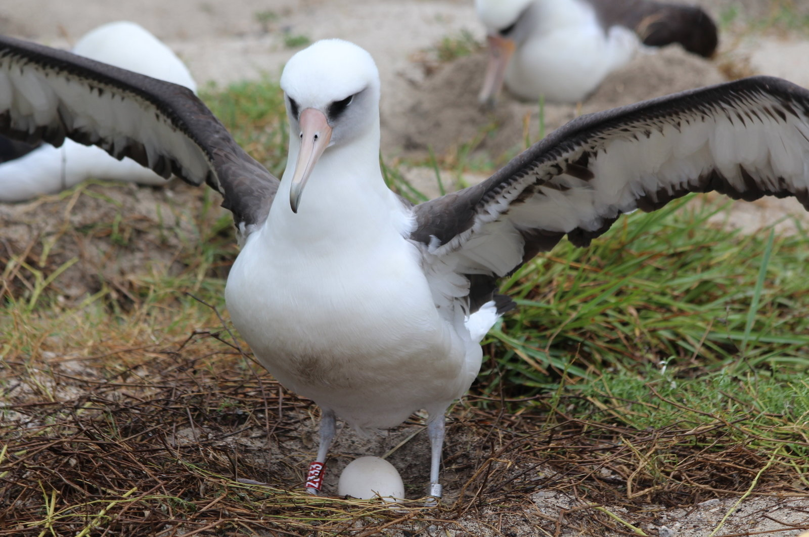 Wisdom the Laysan Albatross, Madalyn Riley