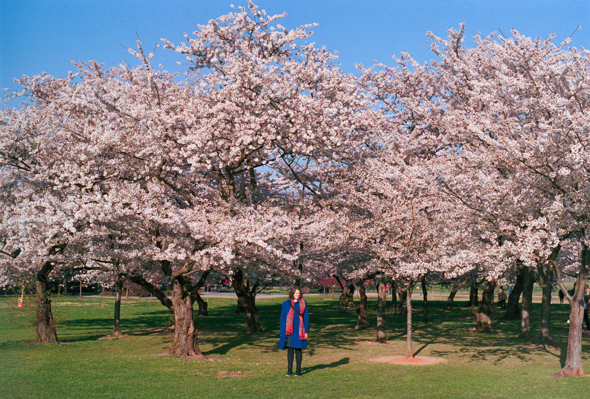 Kat and the Cherry Blossoms I  |  Frame 32