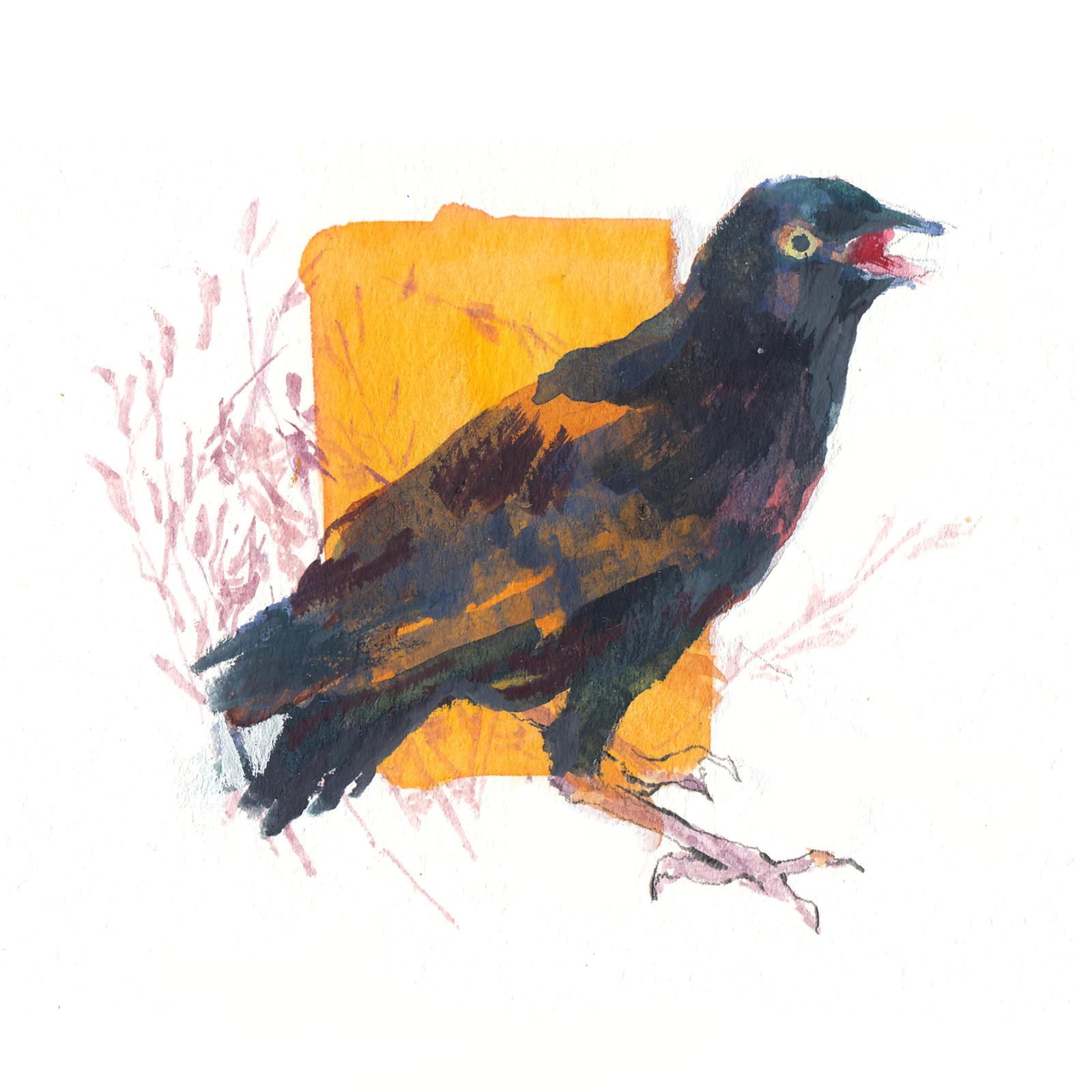 MCQ-bird-1.jpg