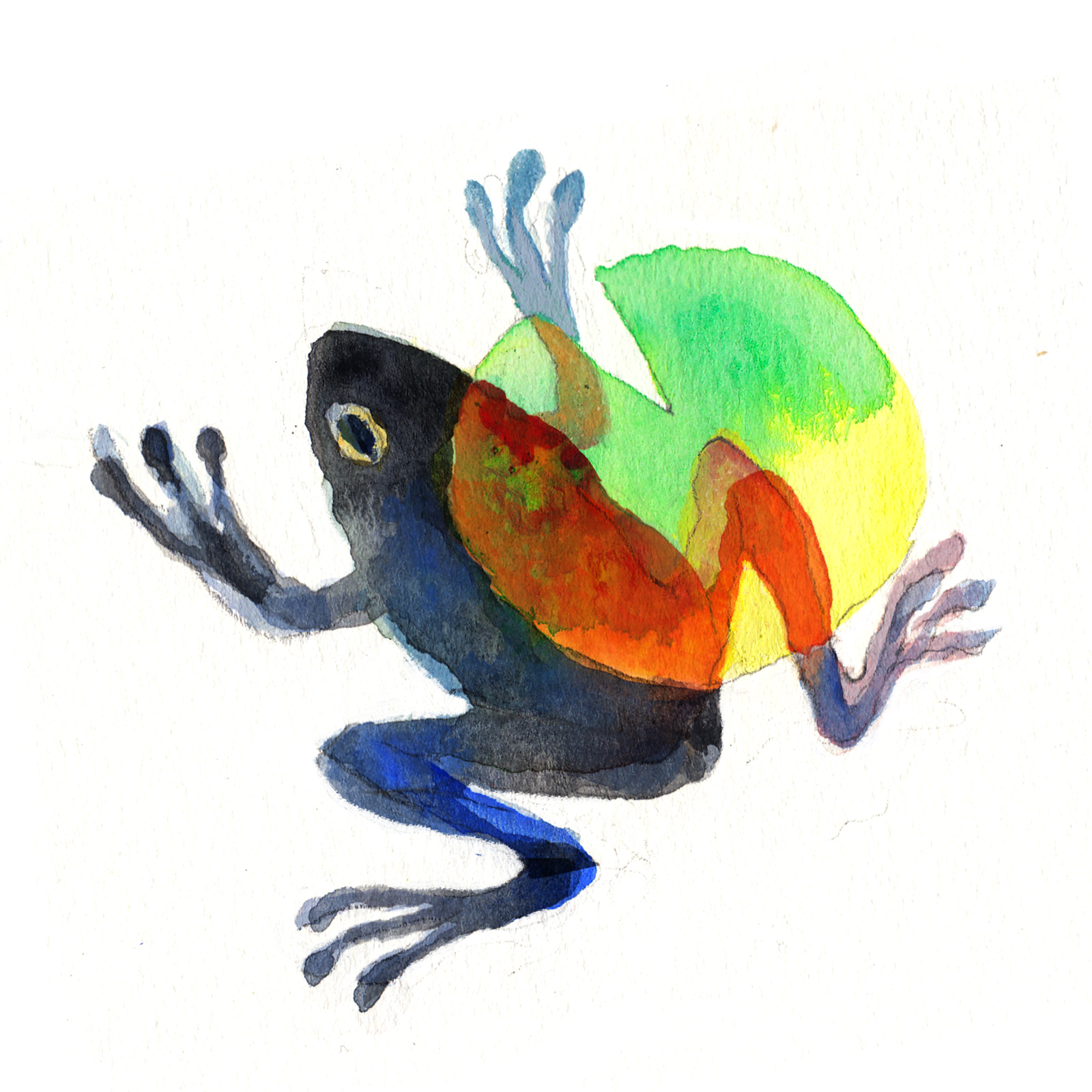 MCQ-frog.jpg