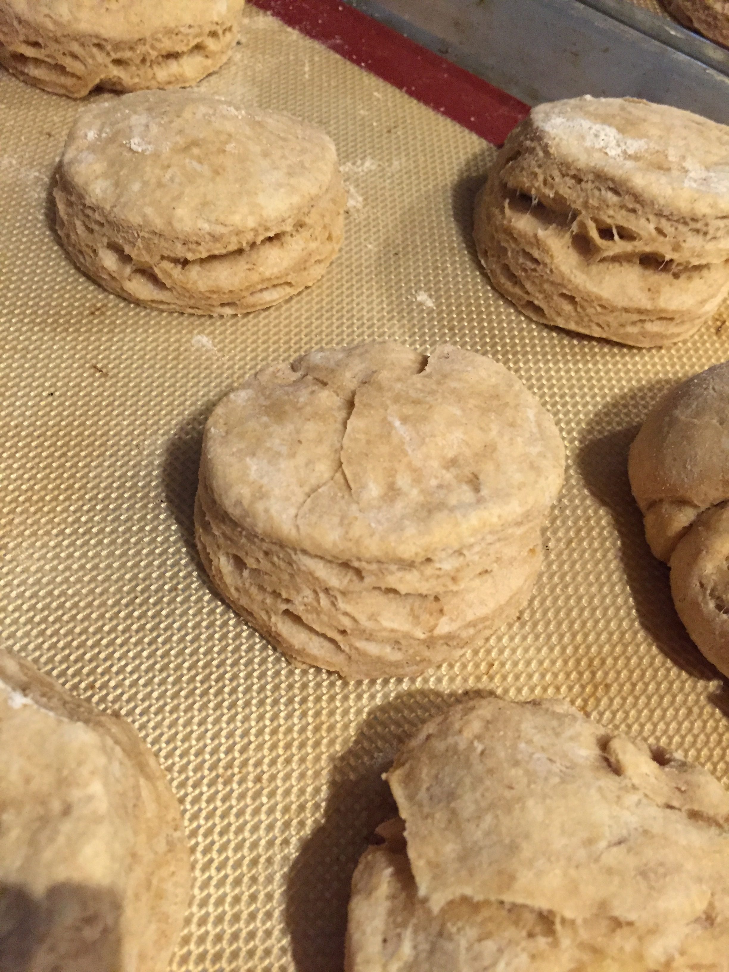 This is my favorite whole wheat biscuit recipe that my husband makes, and they freeze really well!