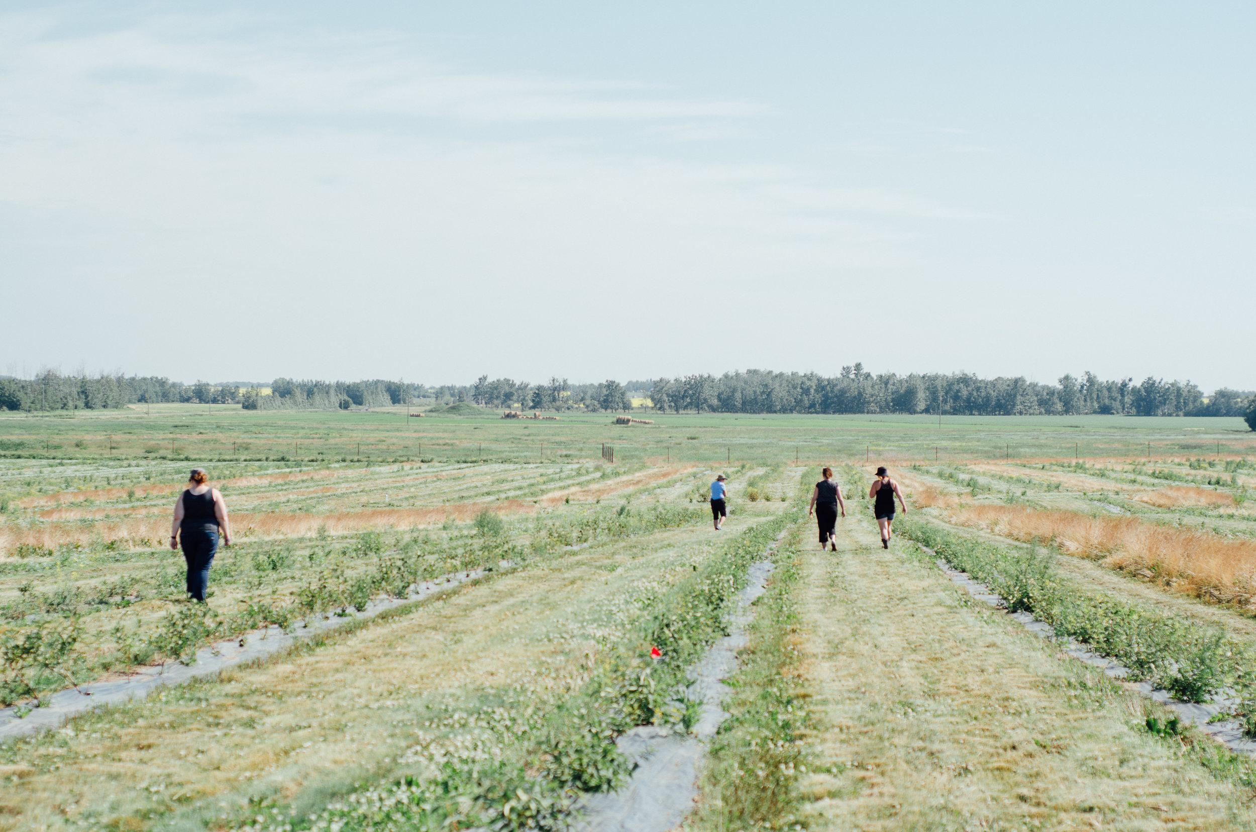 Rosy Farms - Haskap Alberta-5464.jpg