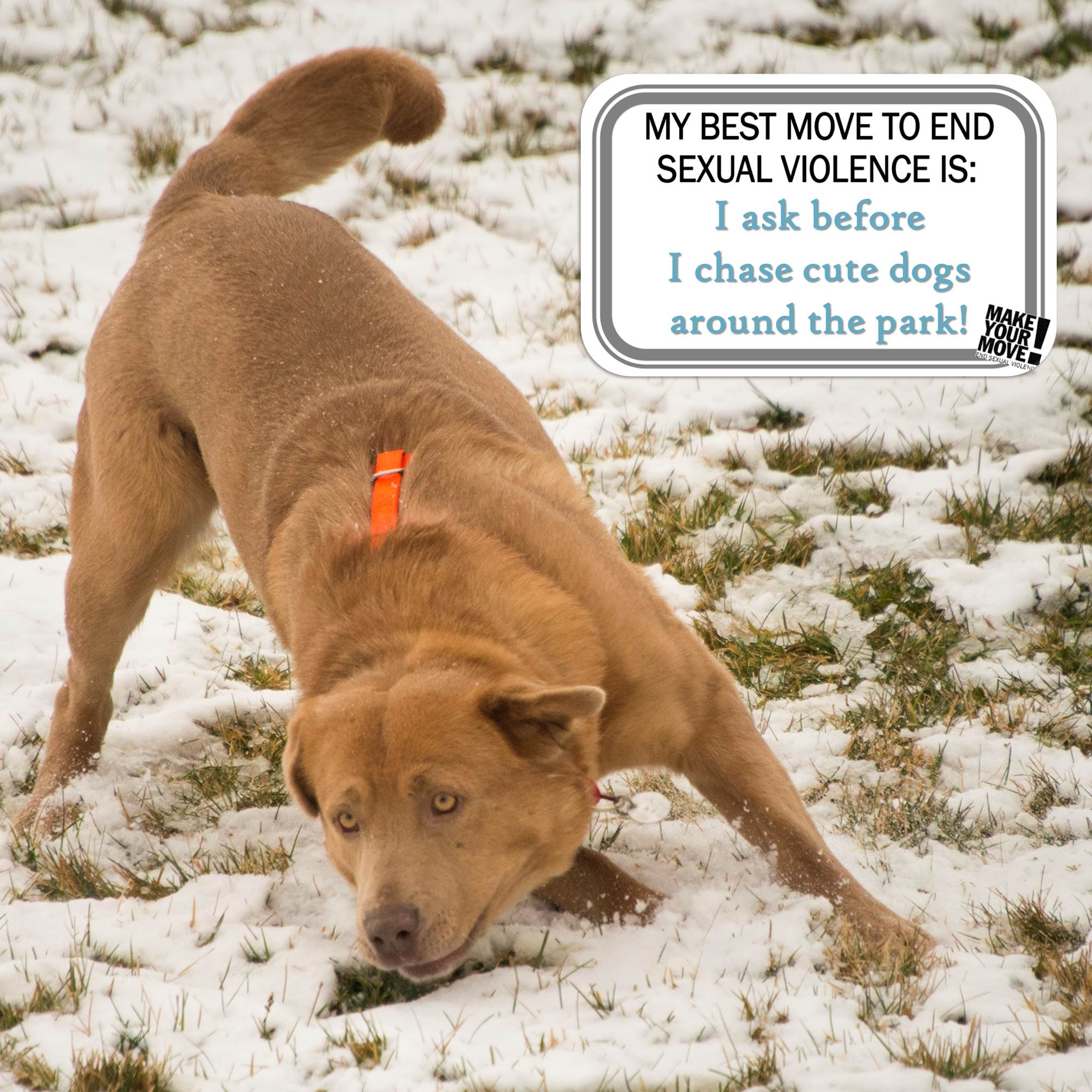 "A golden dog with his tail high in the air is ready to play in the snow. An image overlay reads ""My best move to end sexual violence is: I ask before I chase cute dogs around the park!"""