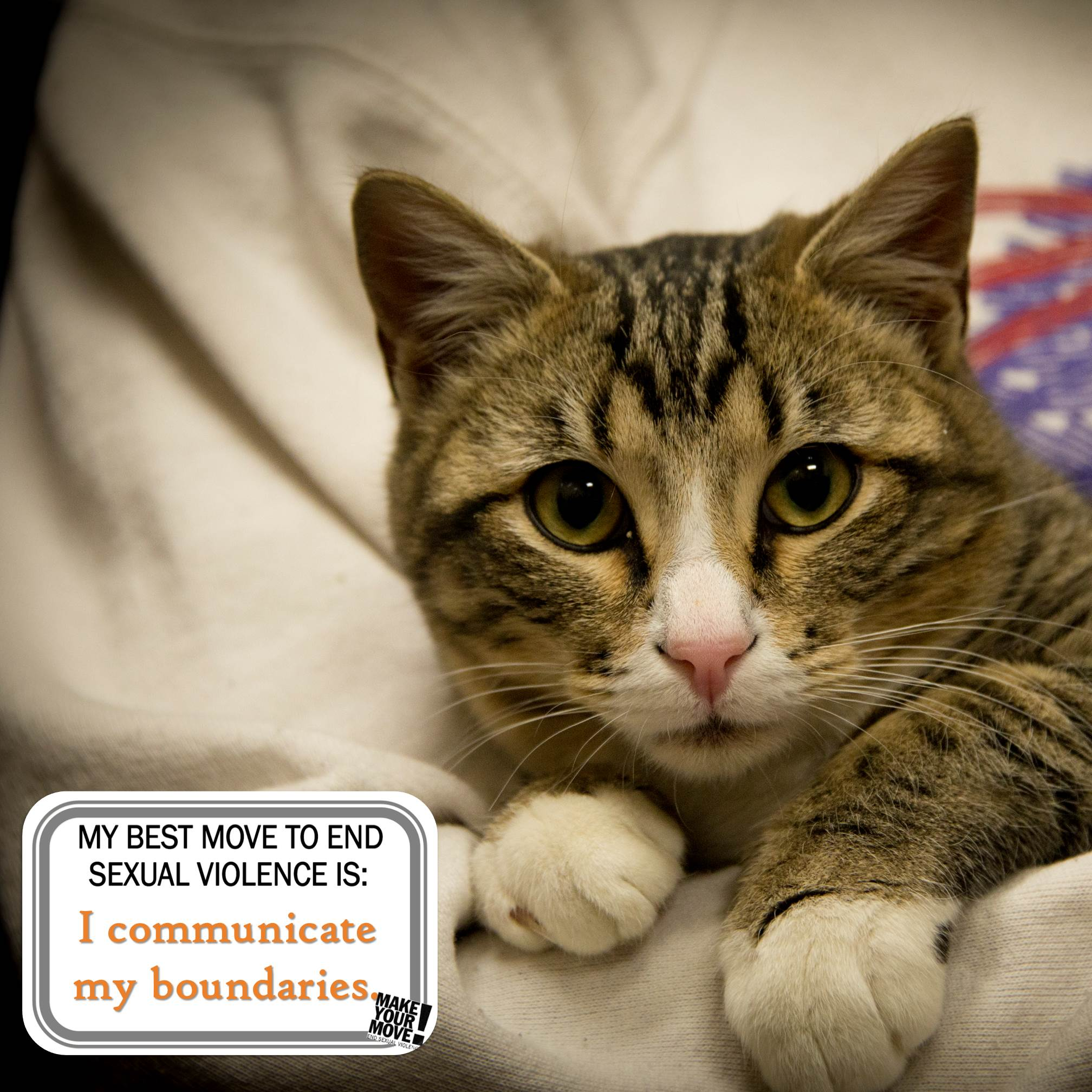 "A light brown tabby cat looks at the camera. An overlay on the photo reads ""My best move to end sexual violence is: I communicate my boundaries."""