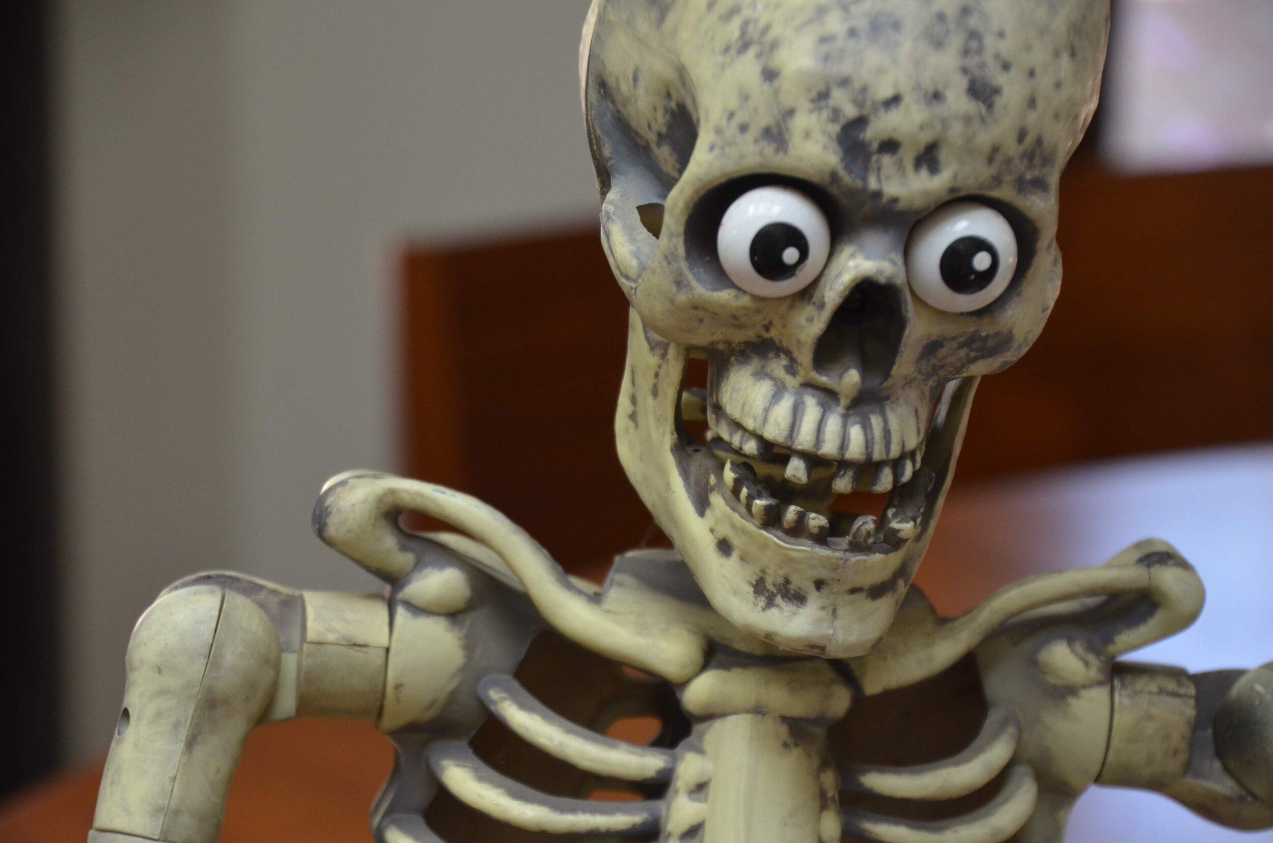 MITM Mr Bones Looking Excited.JPG