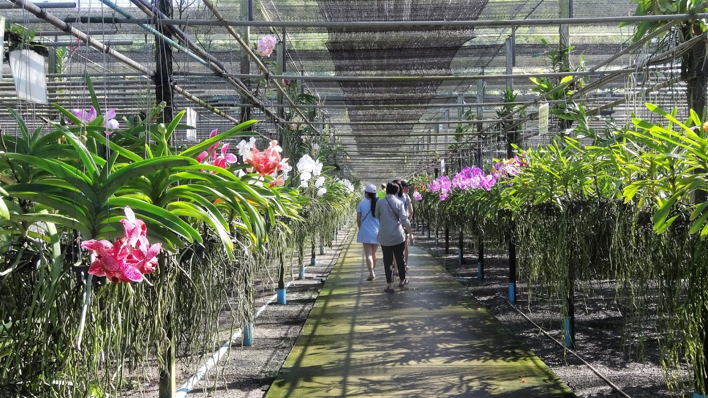 Orchid and Pandan Farms   Orchid and plant exporting is now a big business in Thailand, which is the worlds' biggest orchid exporter. We will take you to visit a farm in the suburbs of Bangkok. They grow different types of exotic orchid right next to the canal. We can sit and relax among the wonderful flowers.