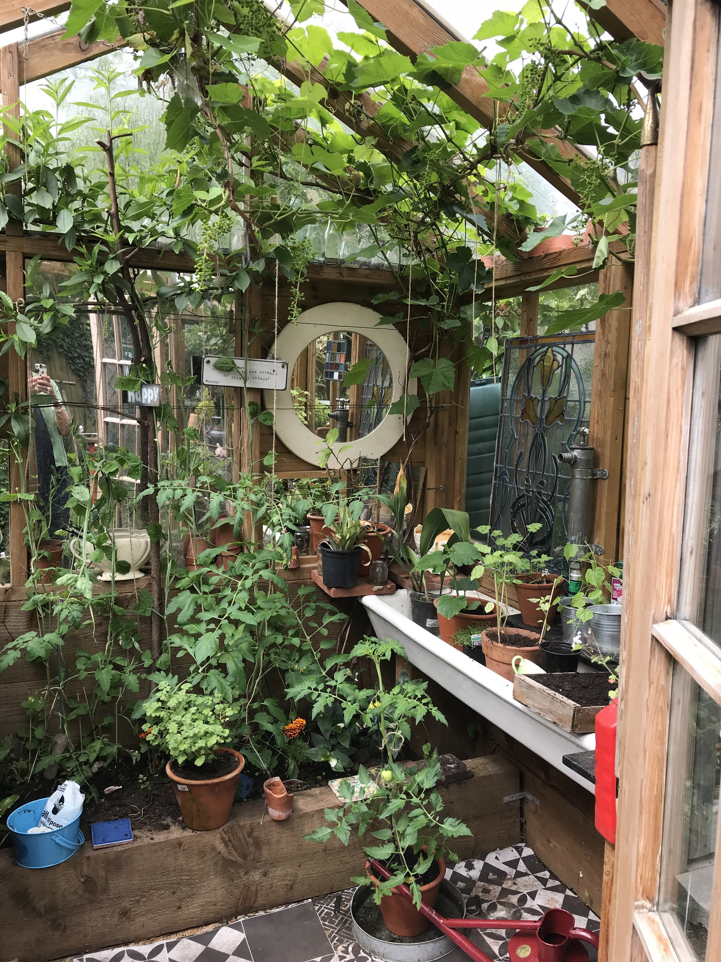 Mandy's glorious greenhouse. It's not very big but shes love it!