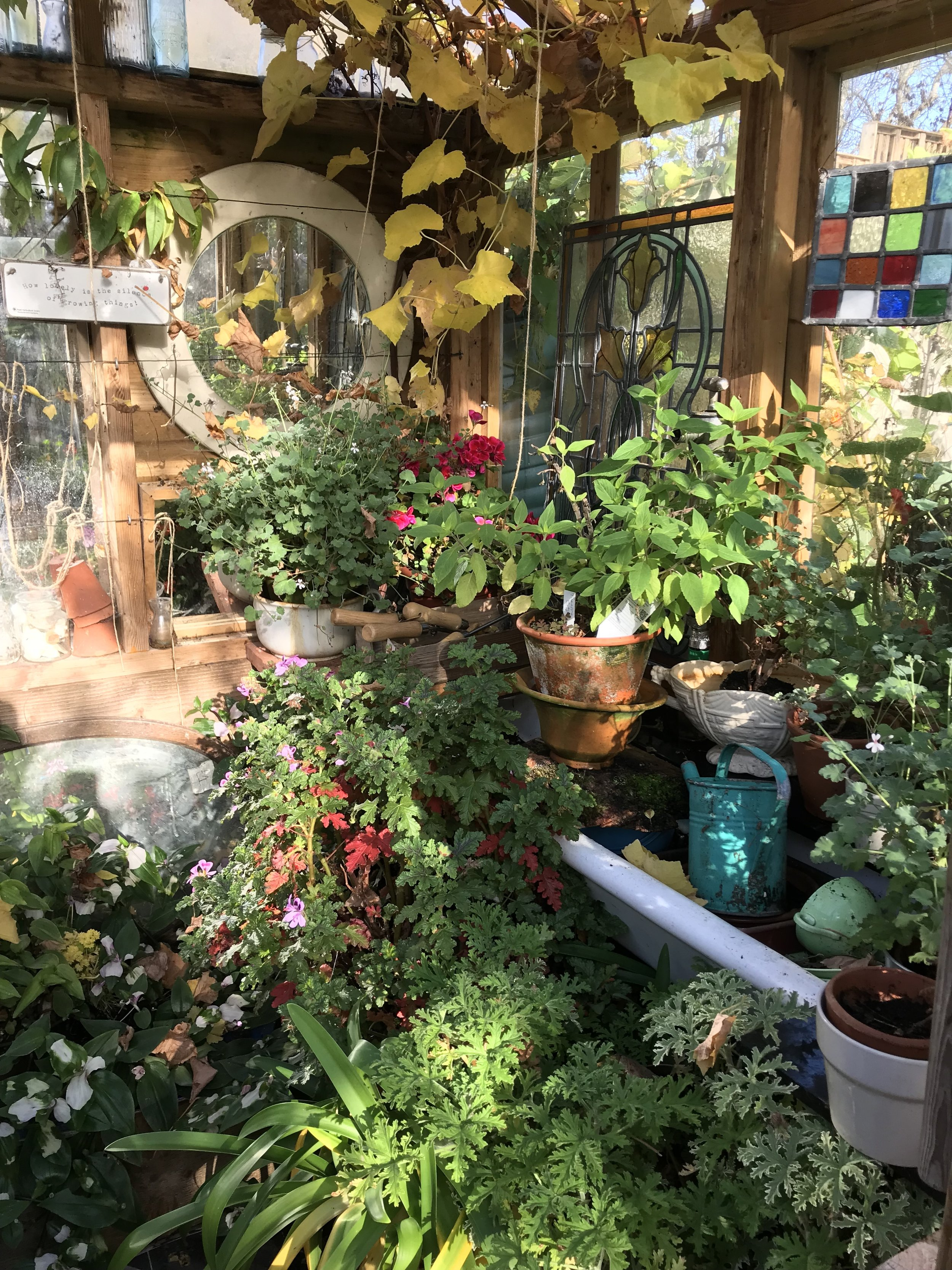 Mandy's Greenhouse full to the brim in preparation for winter