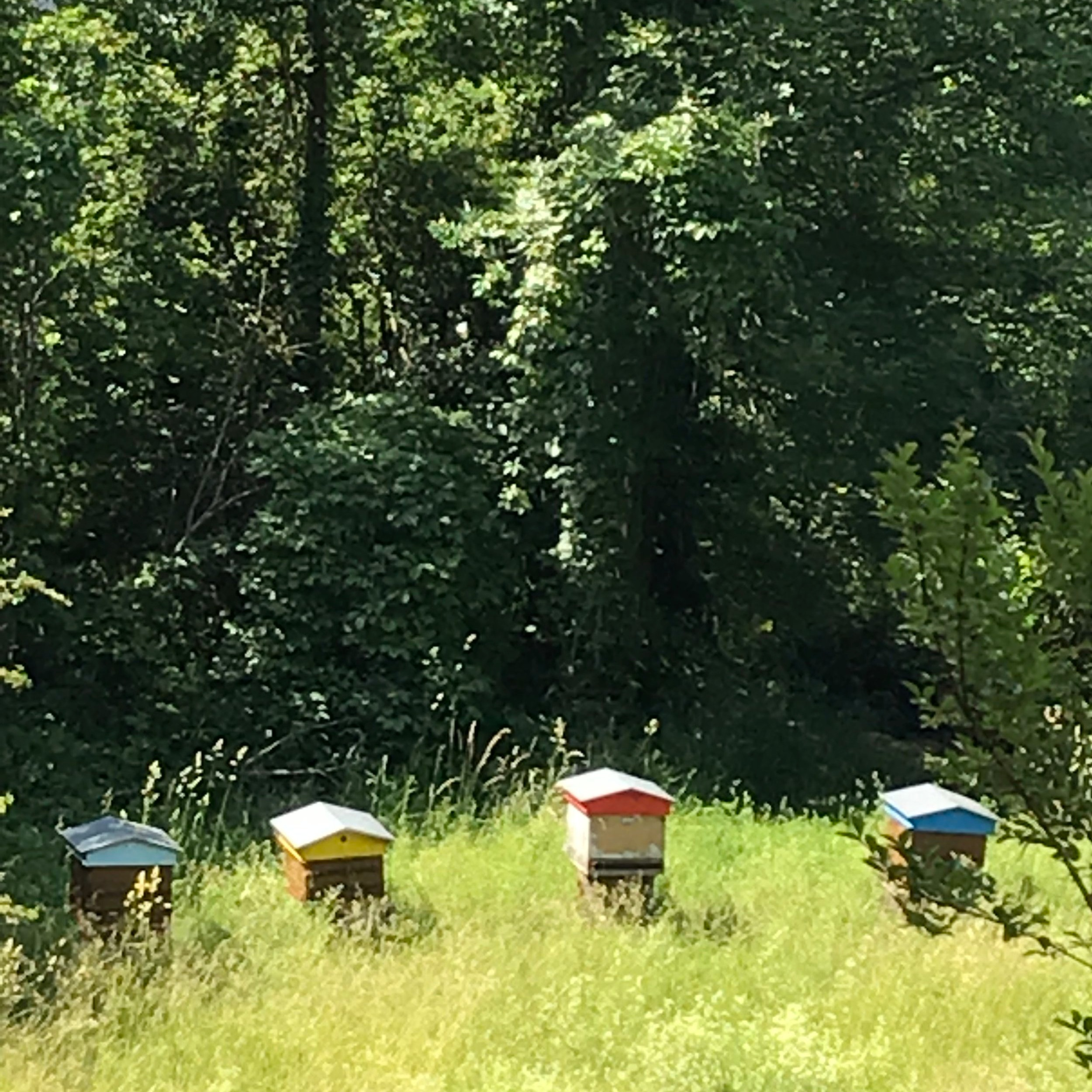 Bee hives outside my bedroom window in Chambery, France