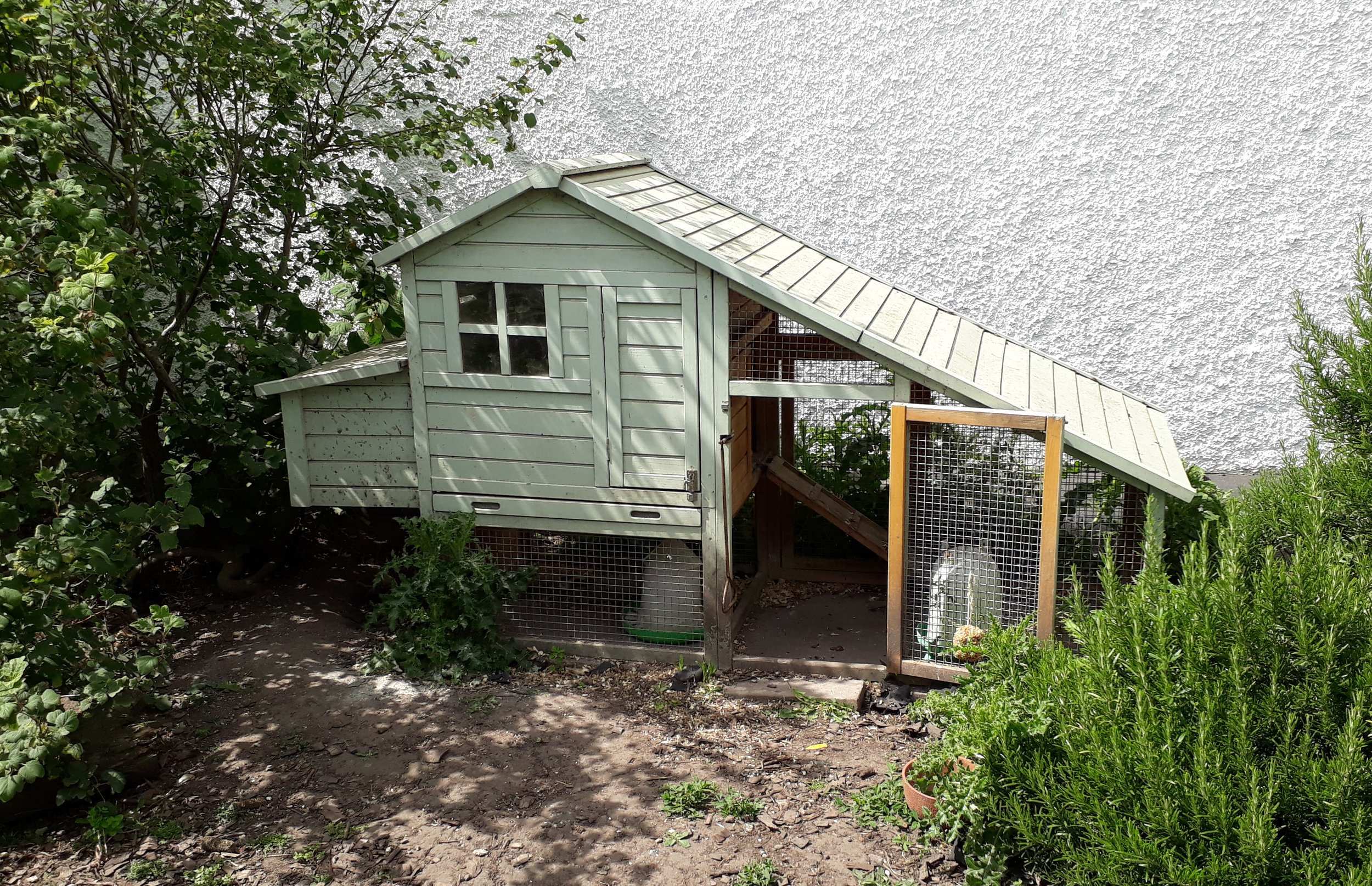 The luxury hen house. Do they know how lucky they are?